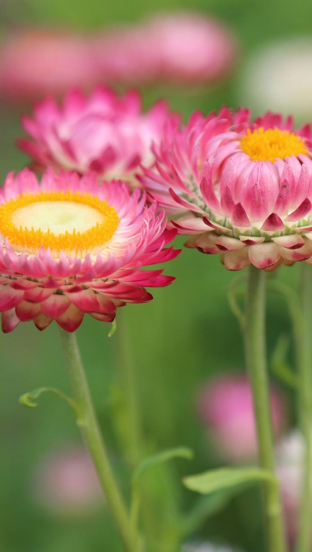 Fondos de pantalla Flores en un prado Vertical