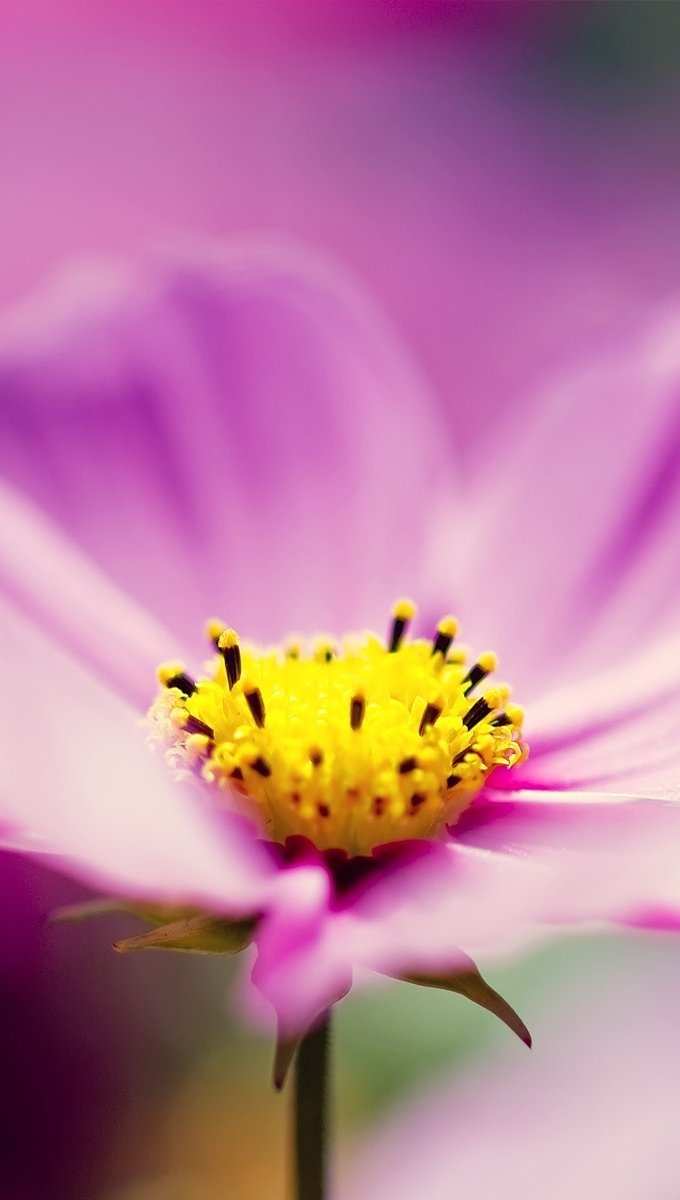 Wallpaper Purple flowers Vertical