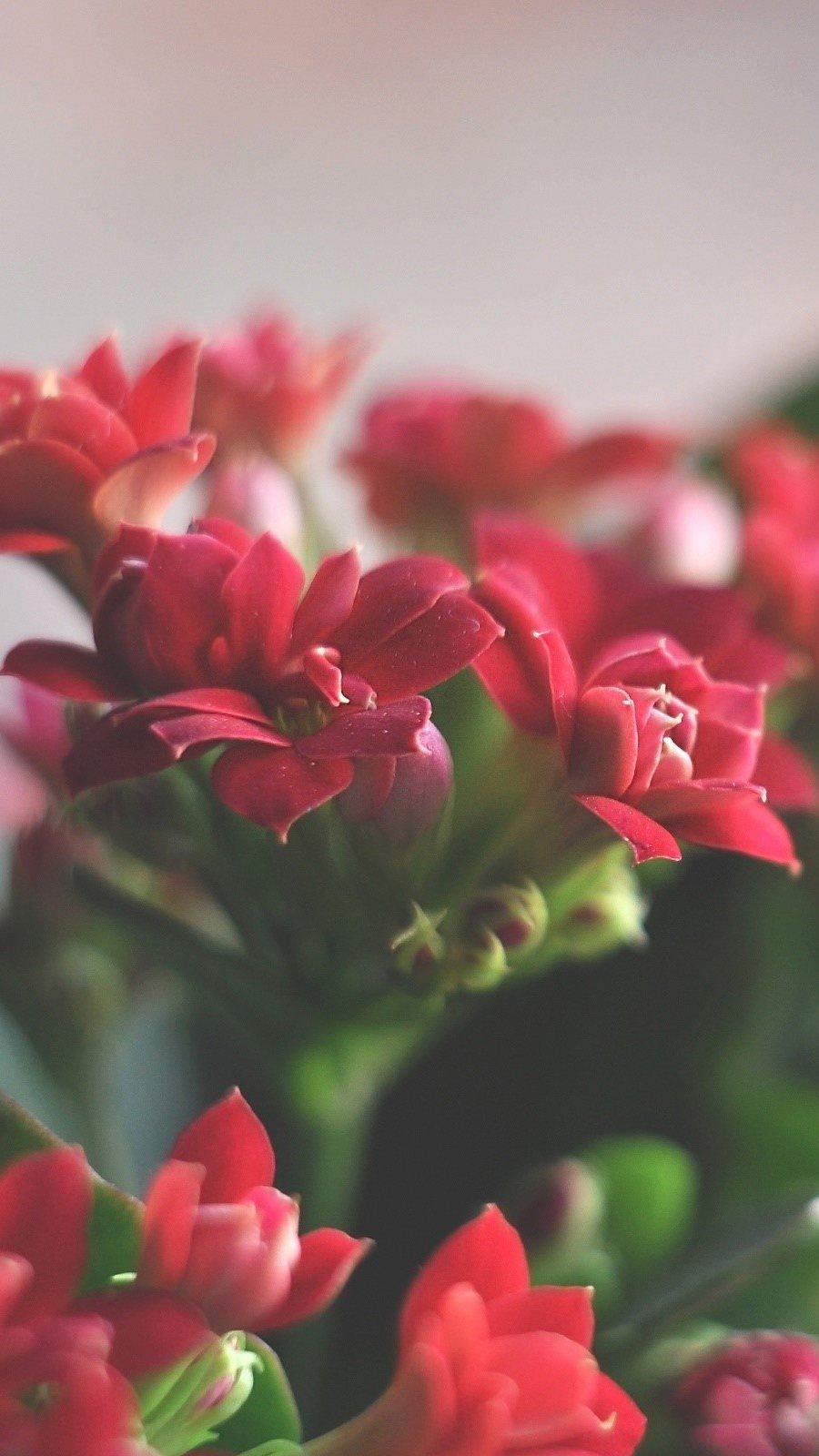 Wallpaper Red flowers Vertical
