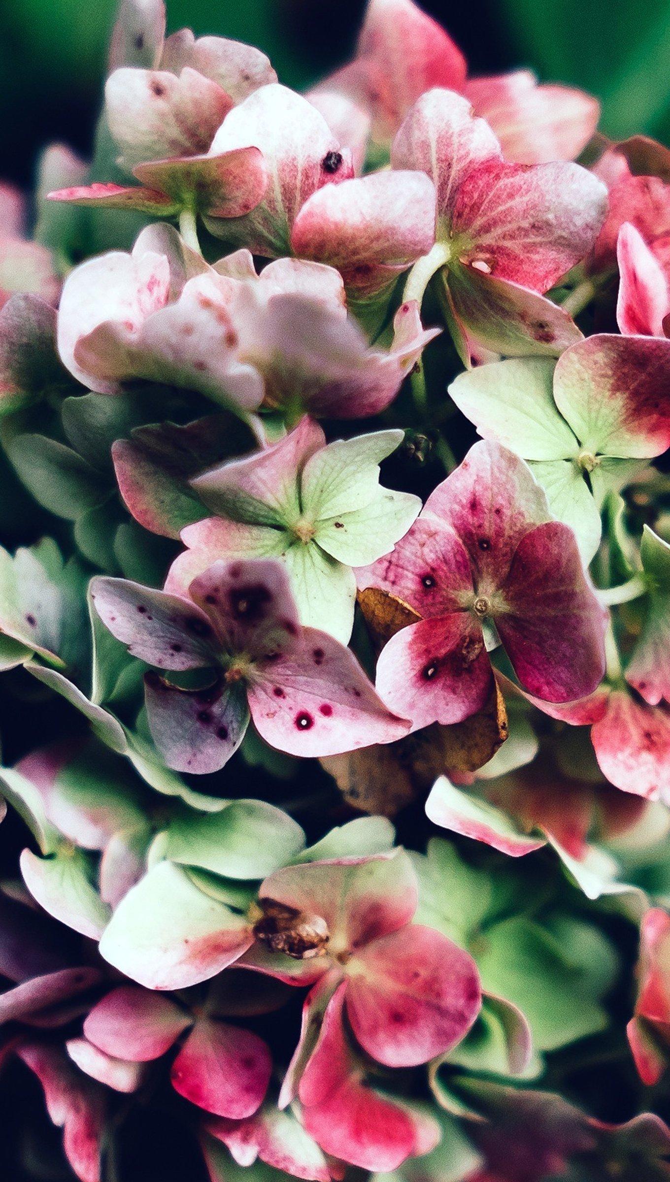 Wallpaper Pink flowers Vertical