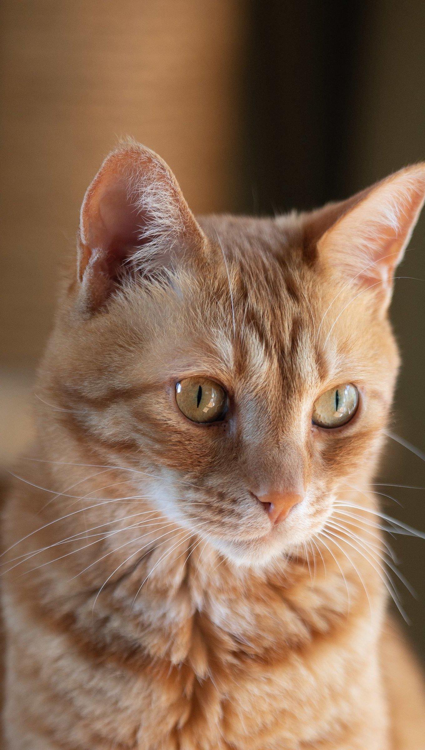 Wallpaper Cat Vertical