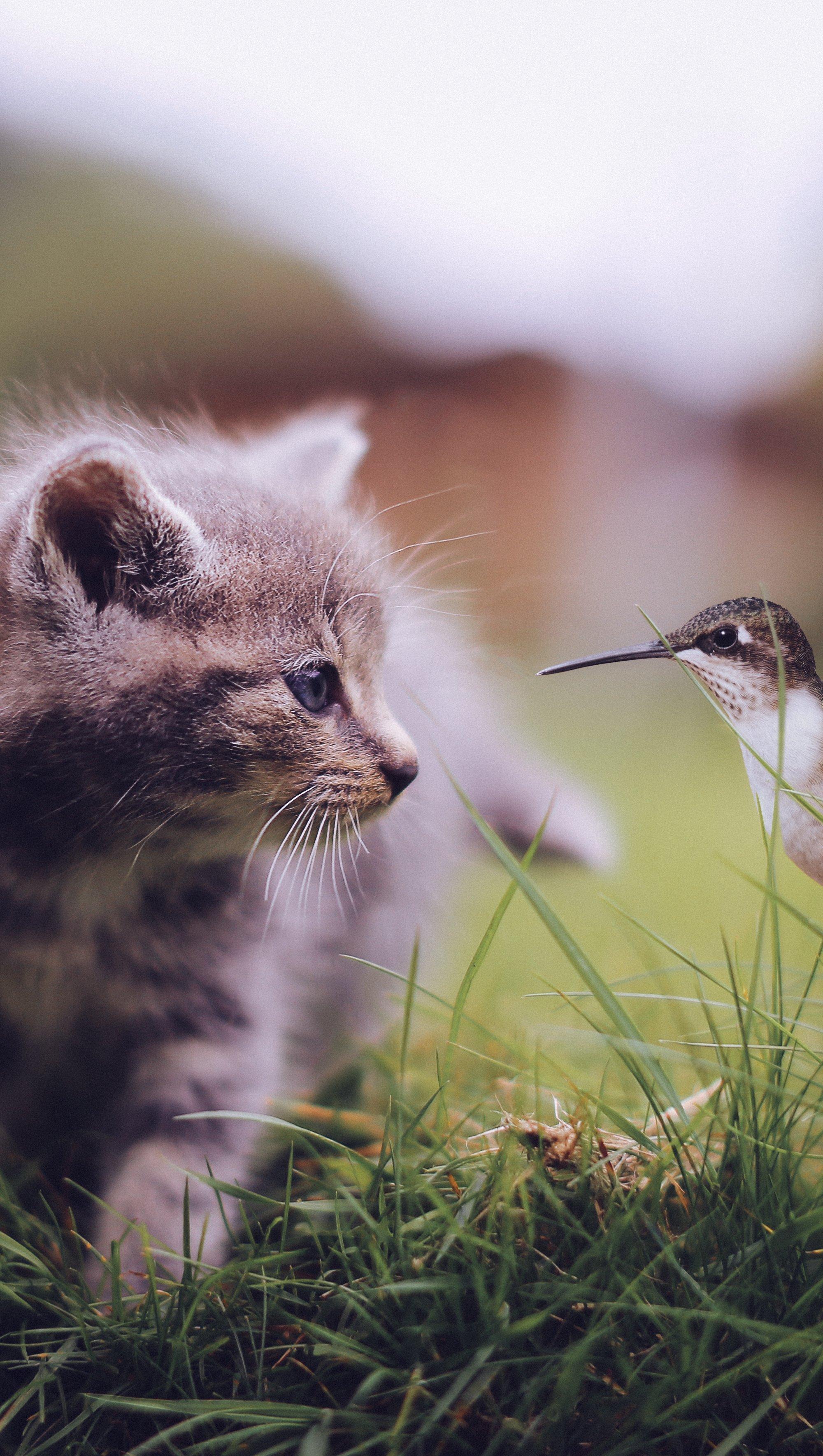 Fondos de pantalla Gato con colibrí Vertical