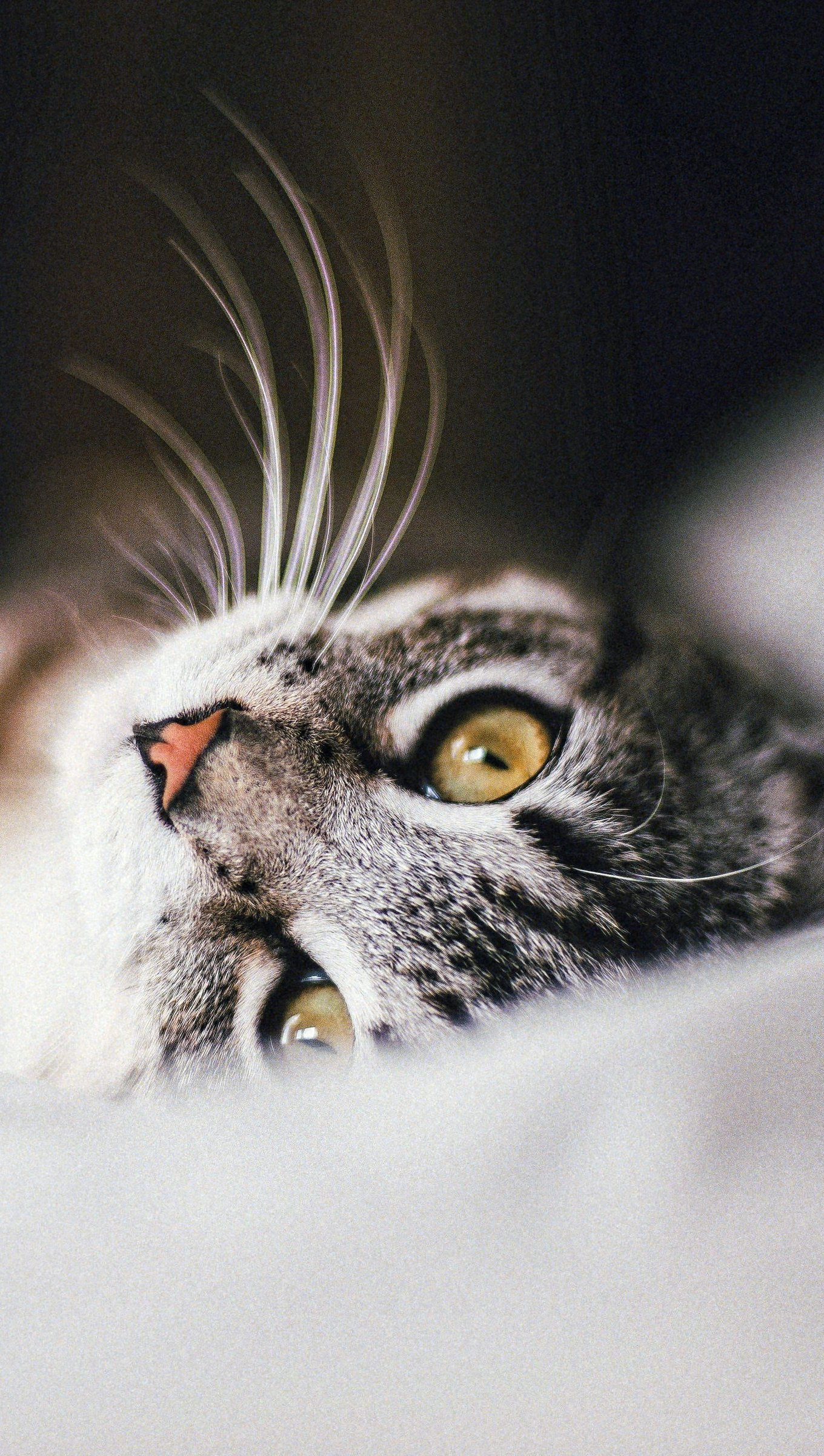 Fondos de pantalla Gato en cama Vertical