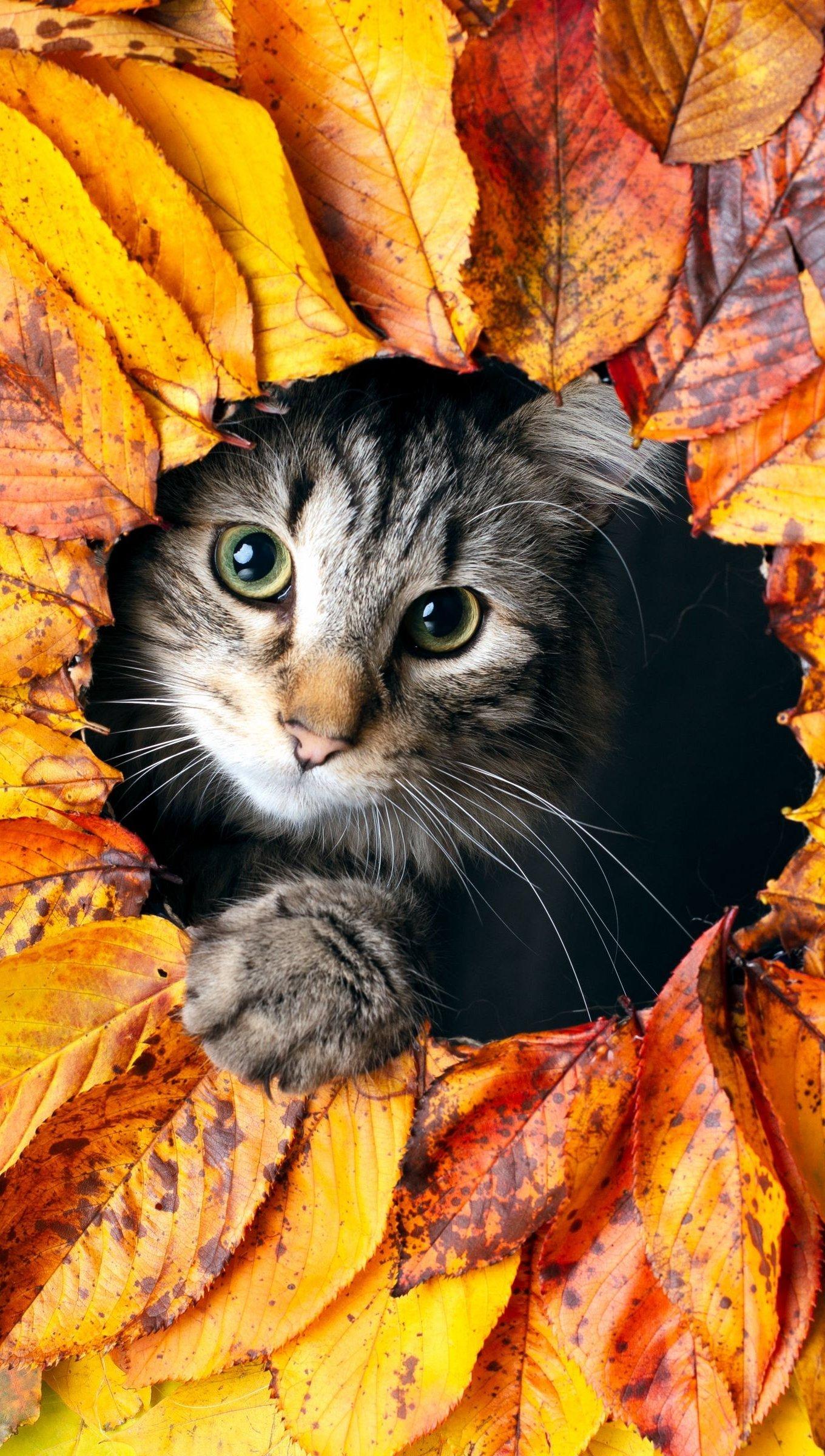 Kitten In Autumn Leaves Wallpaper 4k Ultra Hd Id 6669
