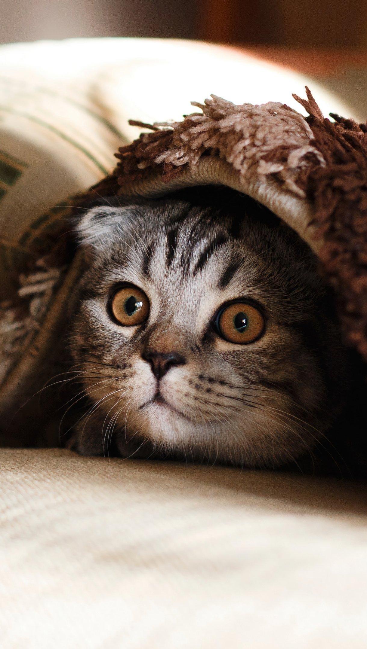 Fondos de pantalla Gato escondiendose en cobijas Vertical