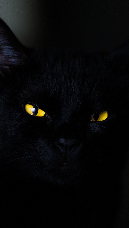 Wallpaper Black Cat in darkness Vertical