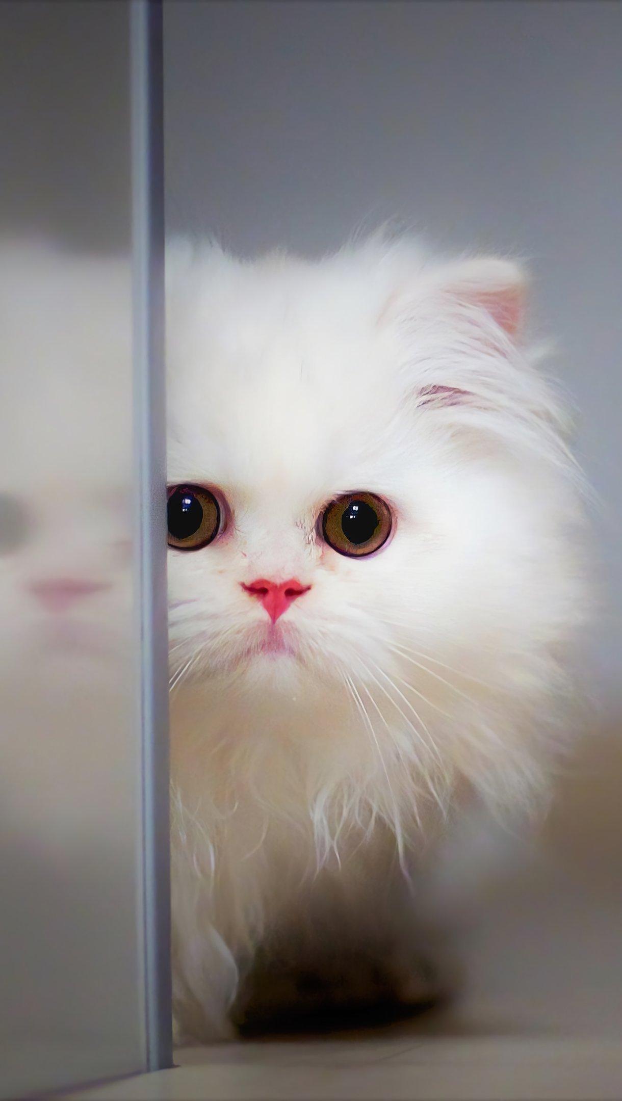 Fondos de pantalla Gato peludo Vertical