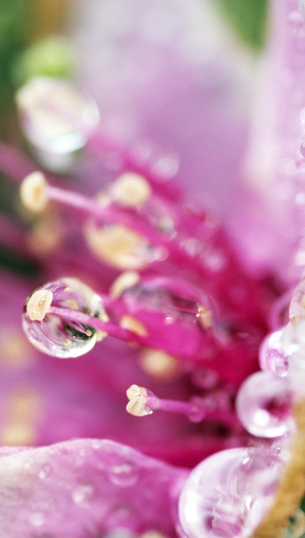 Wallpaper Flower drops Vertical