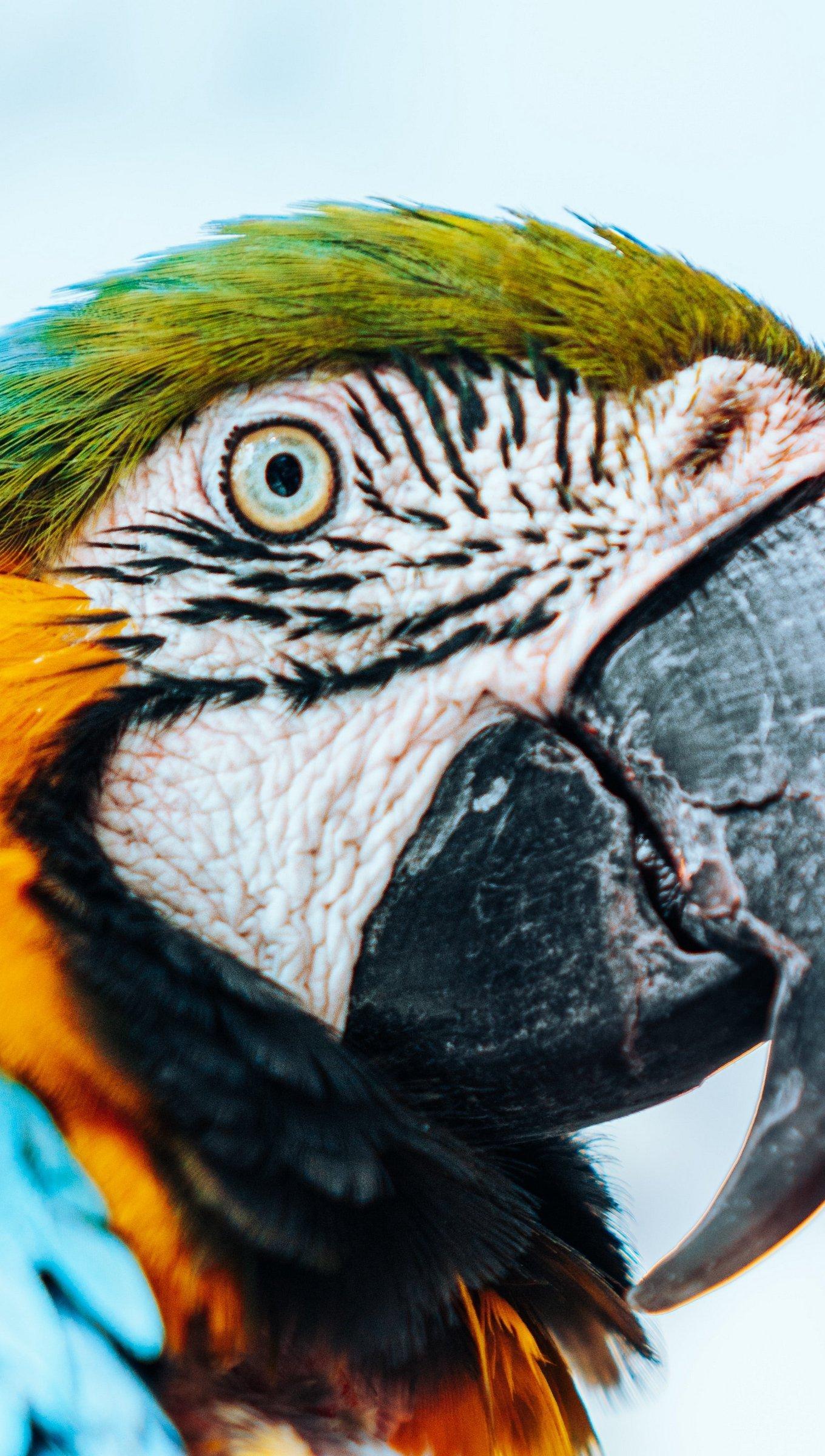 Wallpaper Macaw Parrot Bird Vertical