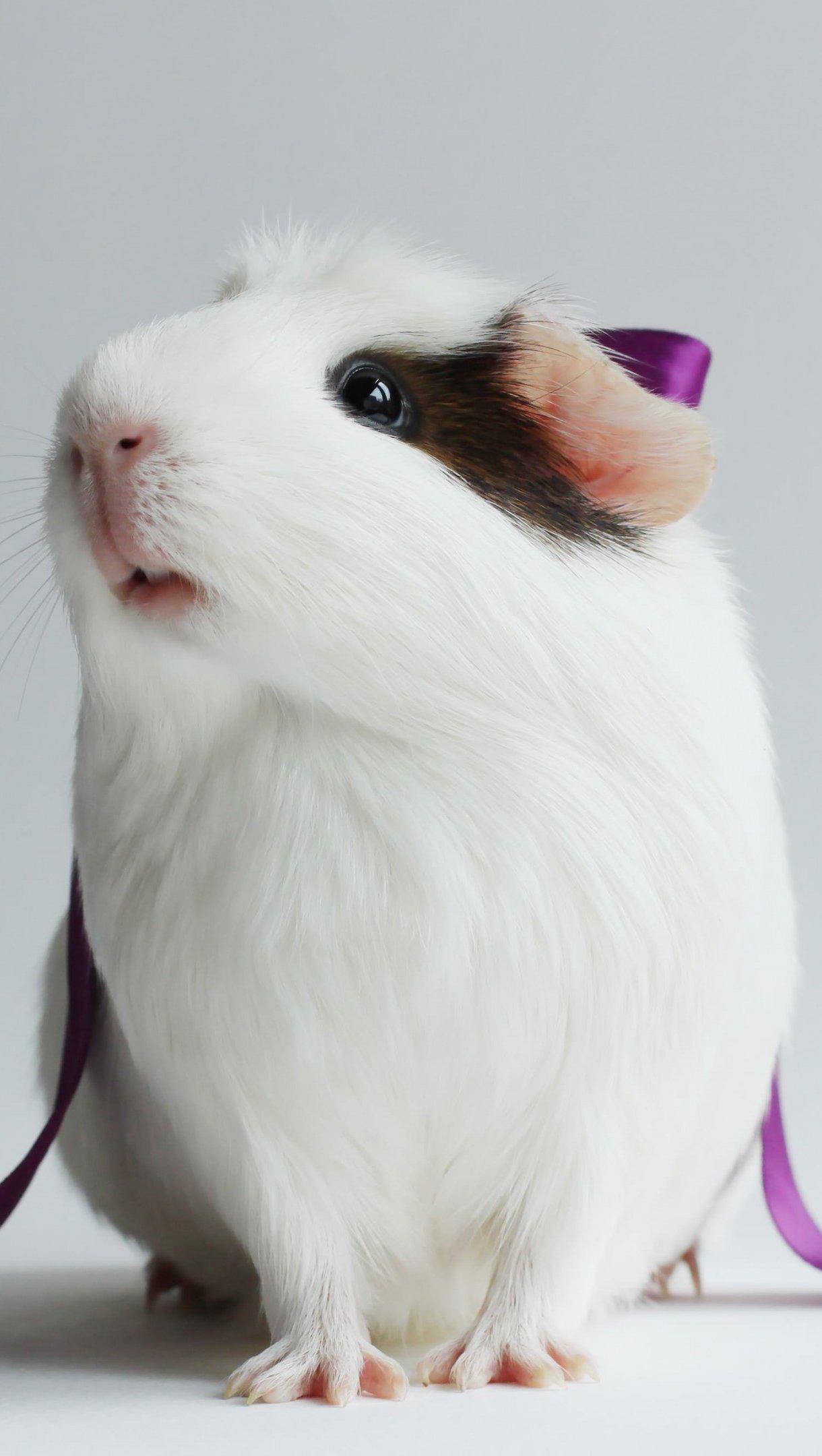 Wallpaper Hamster Vertical