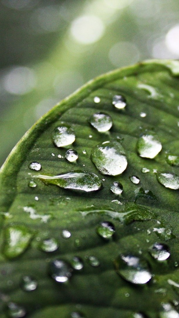 Wallpaper Leaf with water drops Vertical