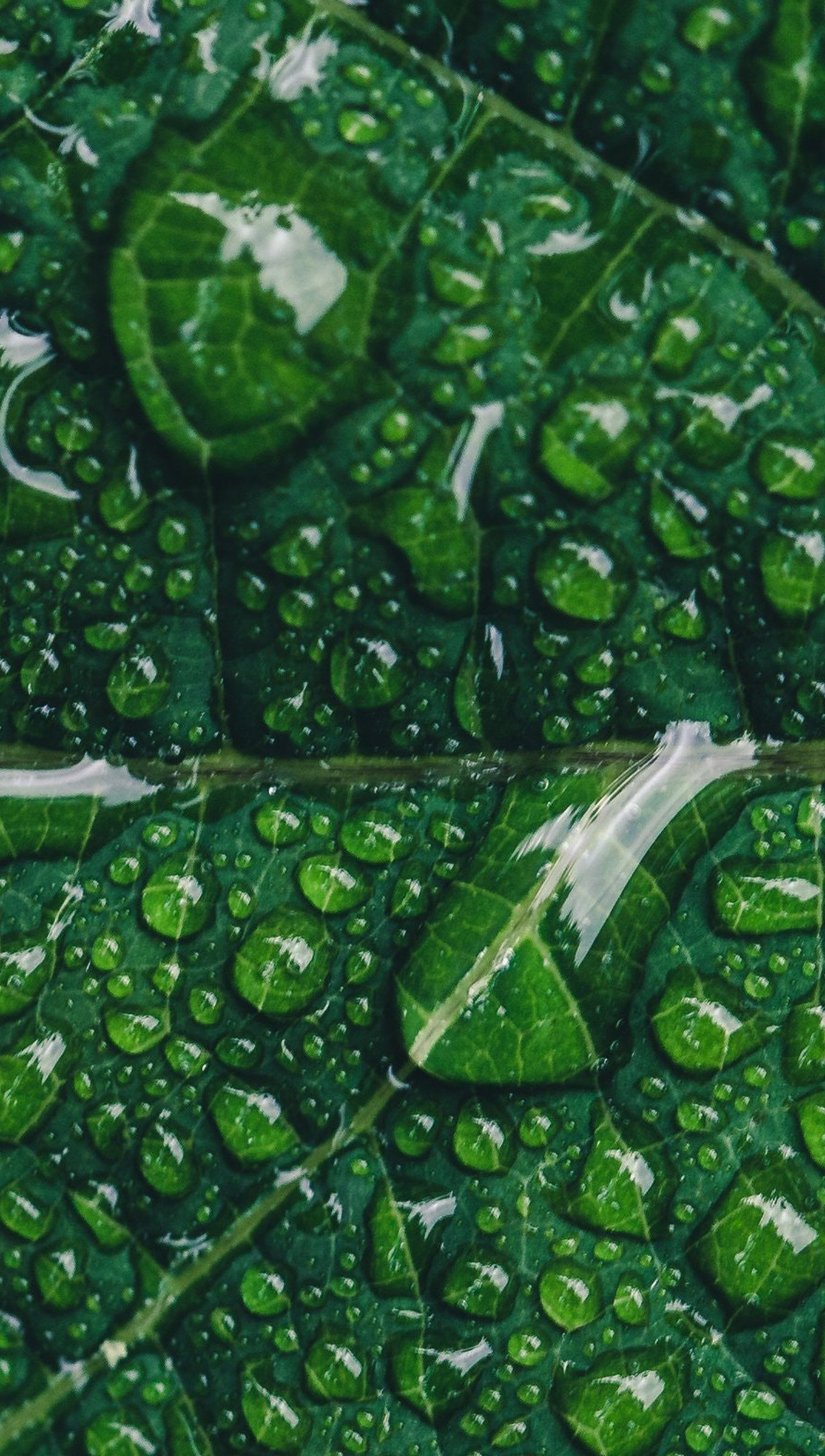 Wallpaper Green leaf with drops Vertical