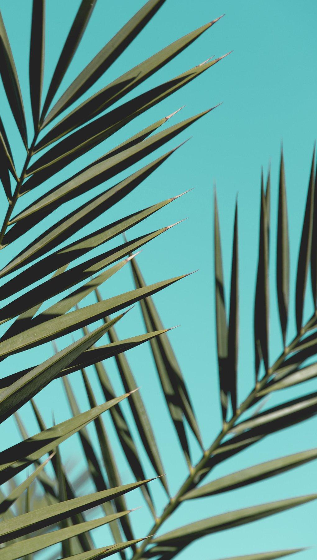 Fondos de pantalla Hojas de palmera Vertical