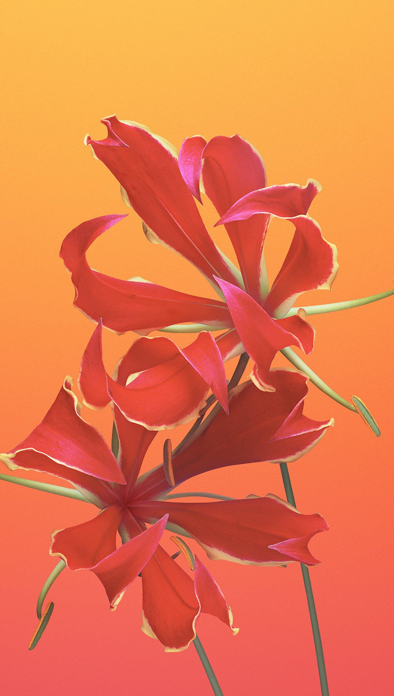 Fondos de pantalla IOS 11 Flor Gloriosa Vertical