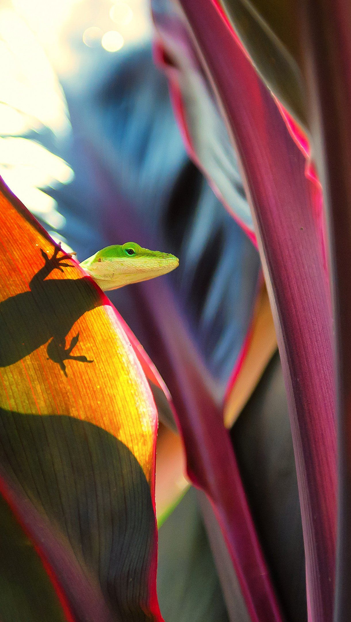 Wallpaper Lizard in leaf Vertical
