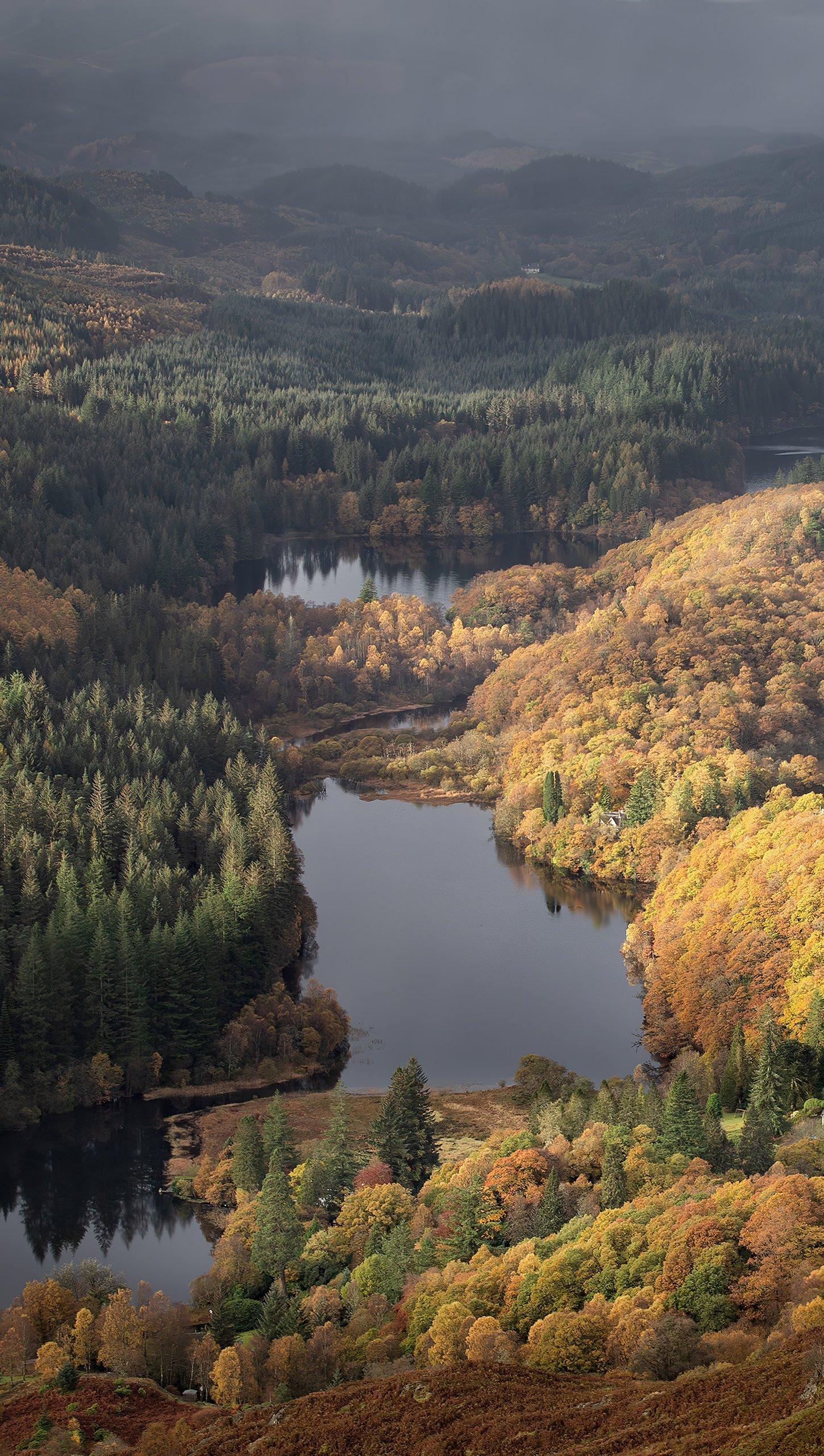 Fondos de pantalla Lago en el bosque Vertical