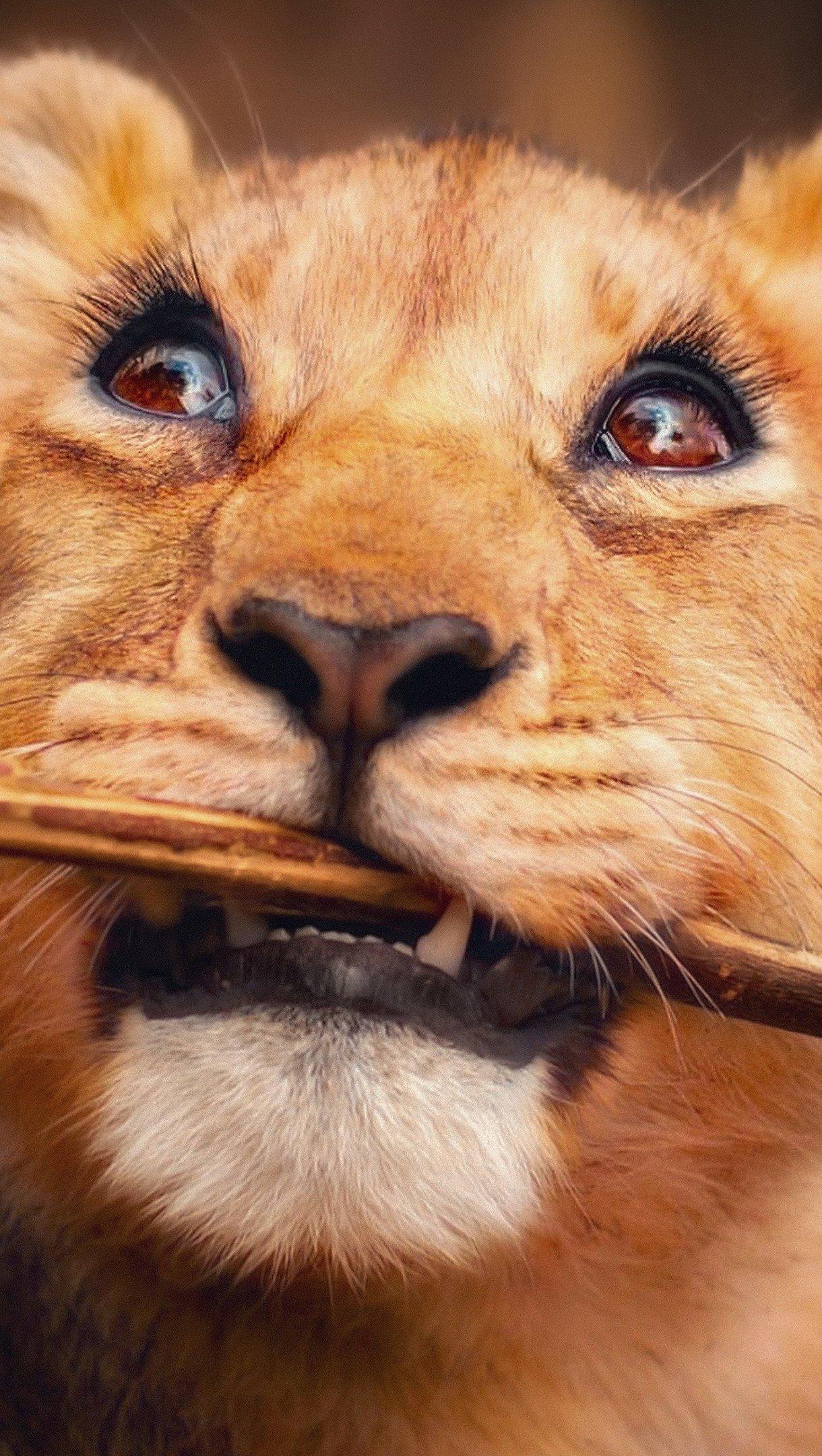 Fondos de pantalla León cachorro Vertical