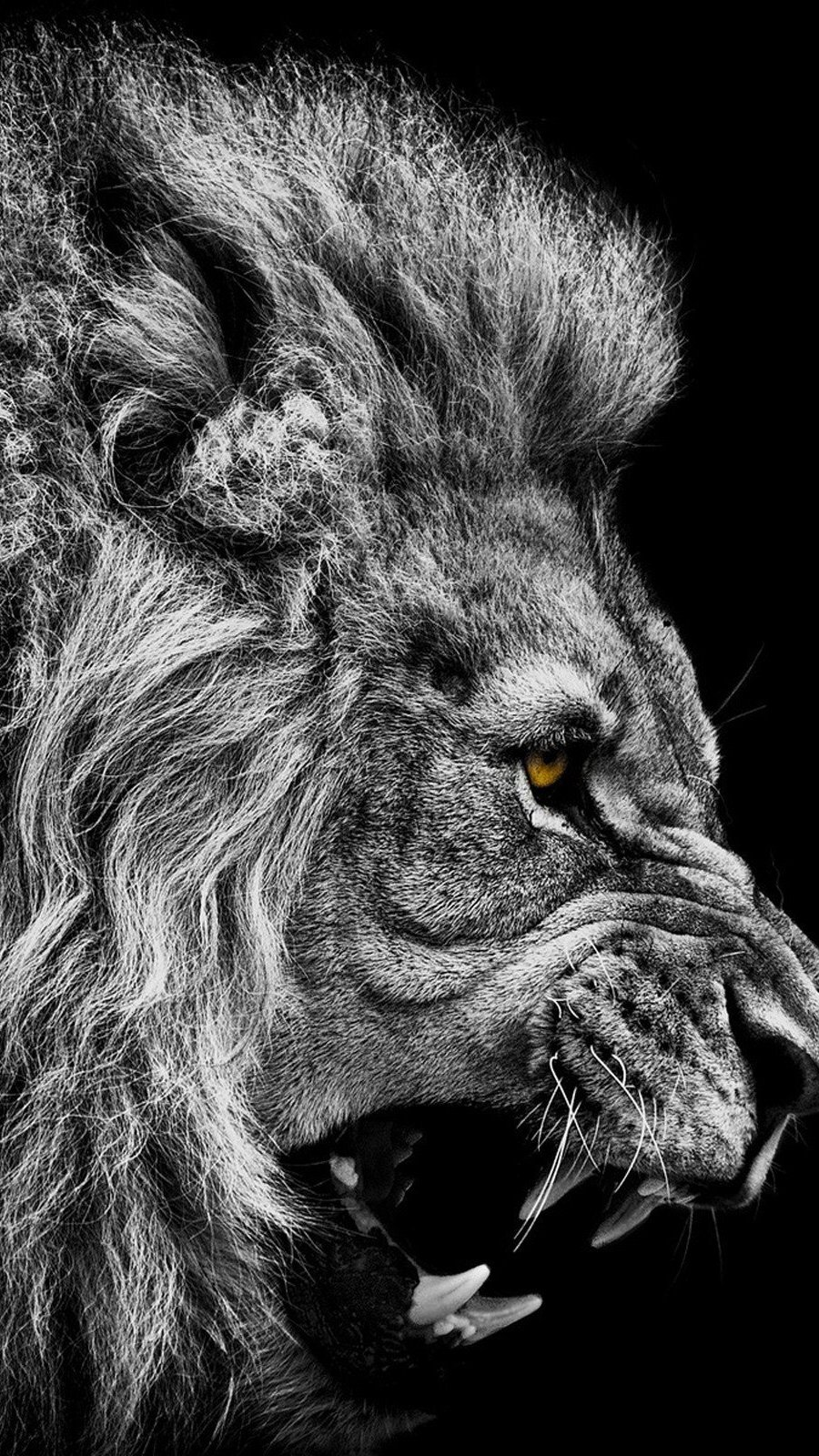 Wallpaper Lion in black and white Vertical