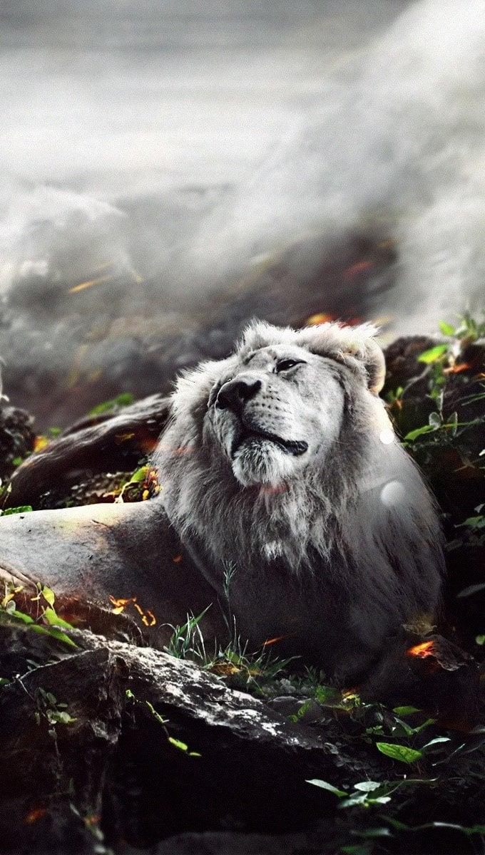 Fondos de pantalla Leon en una selva en fuego Vertical