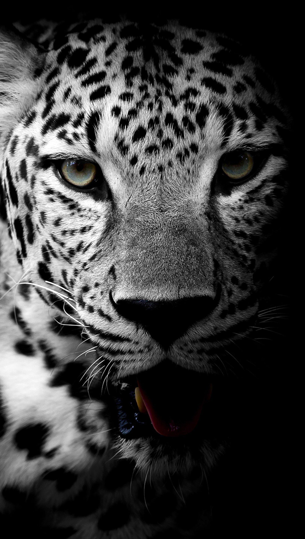 Fondos de pantalla Leopardo en Blanco y Negro Vertical