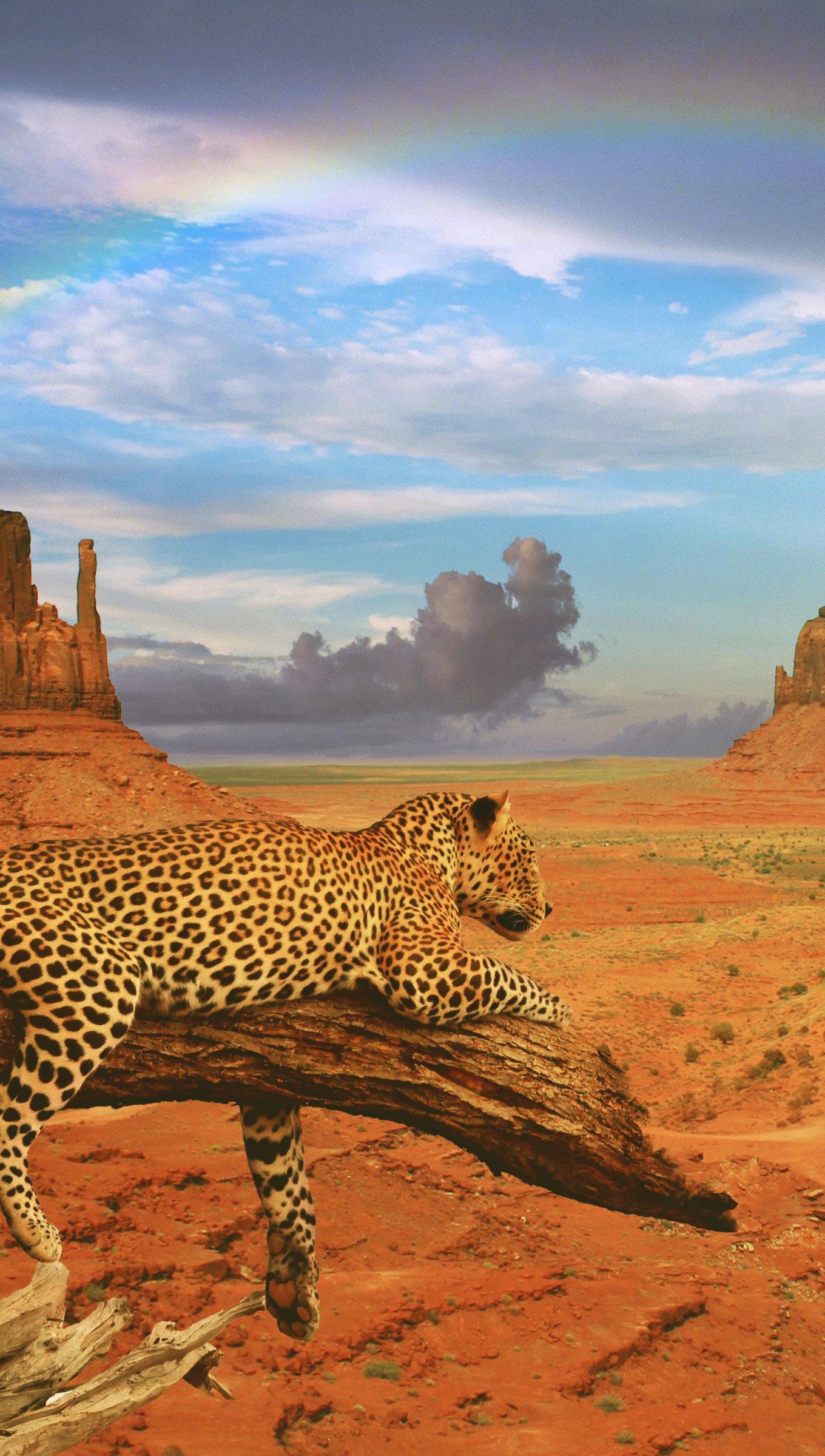 Wallpaper Leopard in desert landscape with rainbow Vertical