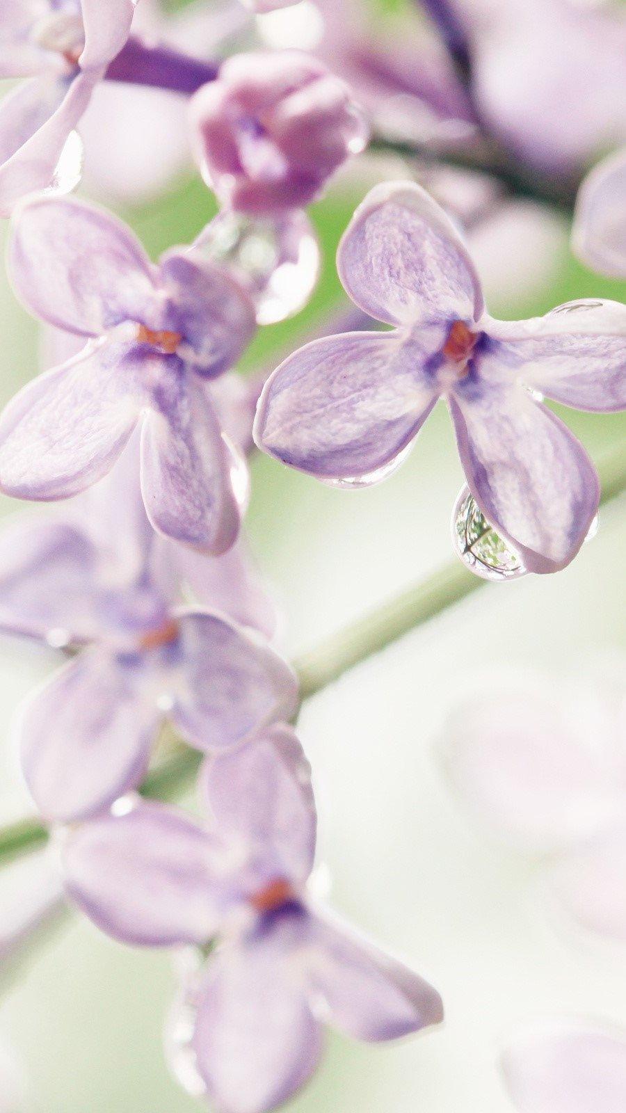 Wallpaper Lilacs Vertical