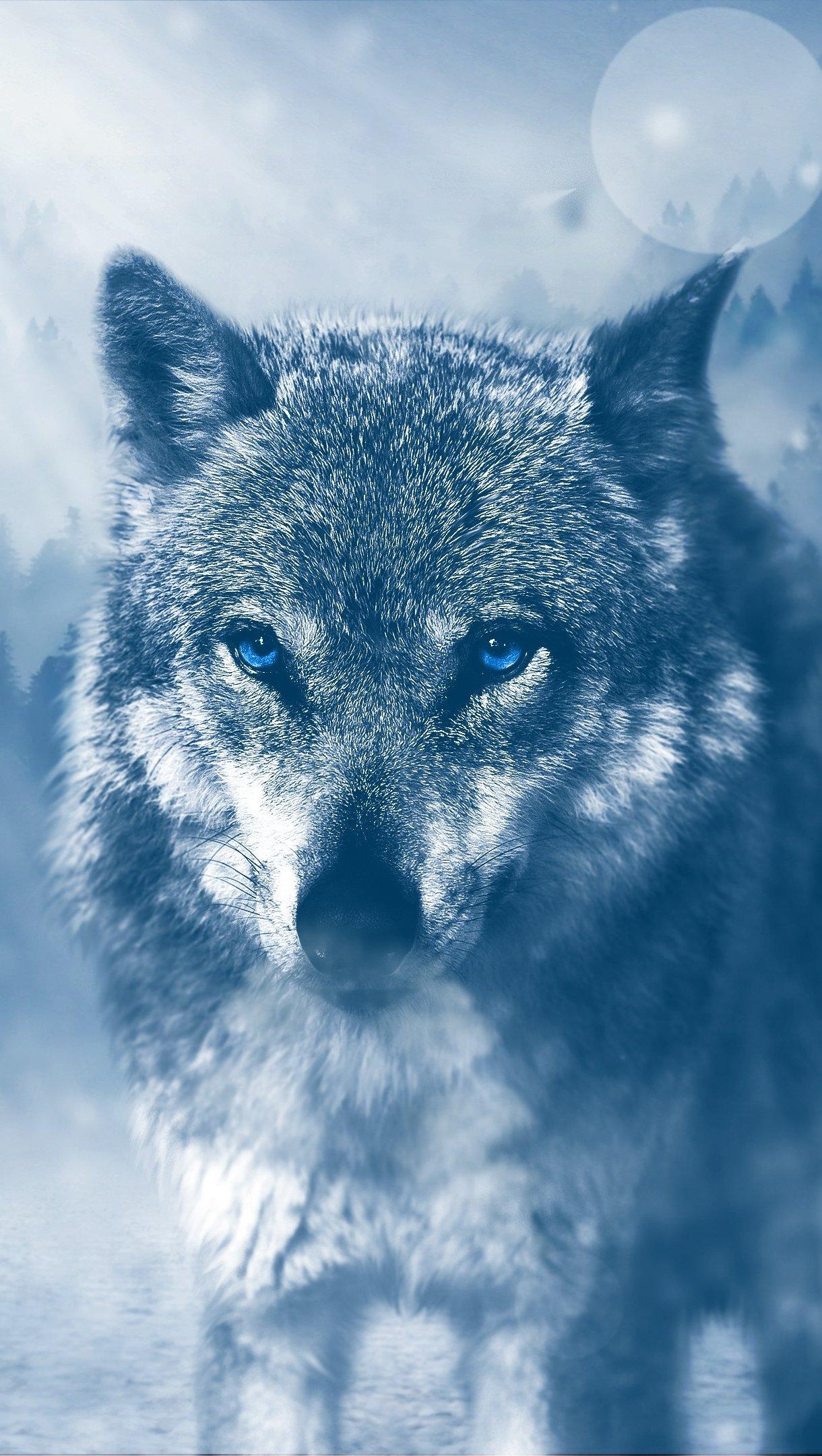 Fondos de pantalla Lobo de ojos azules Vertical