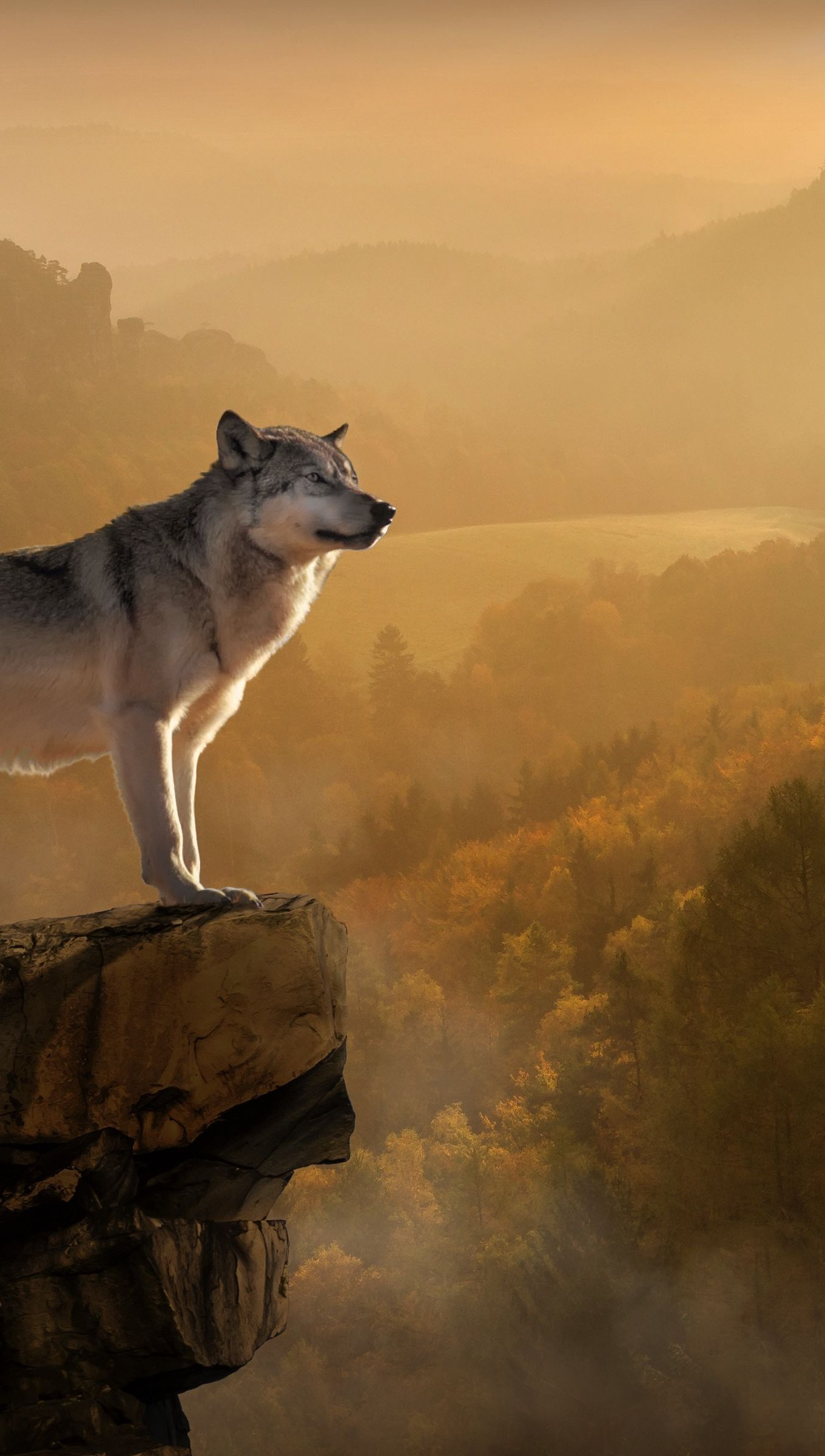 Wallpaper Wolf on rock on top of the forest Vertical