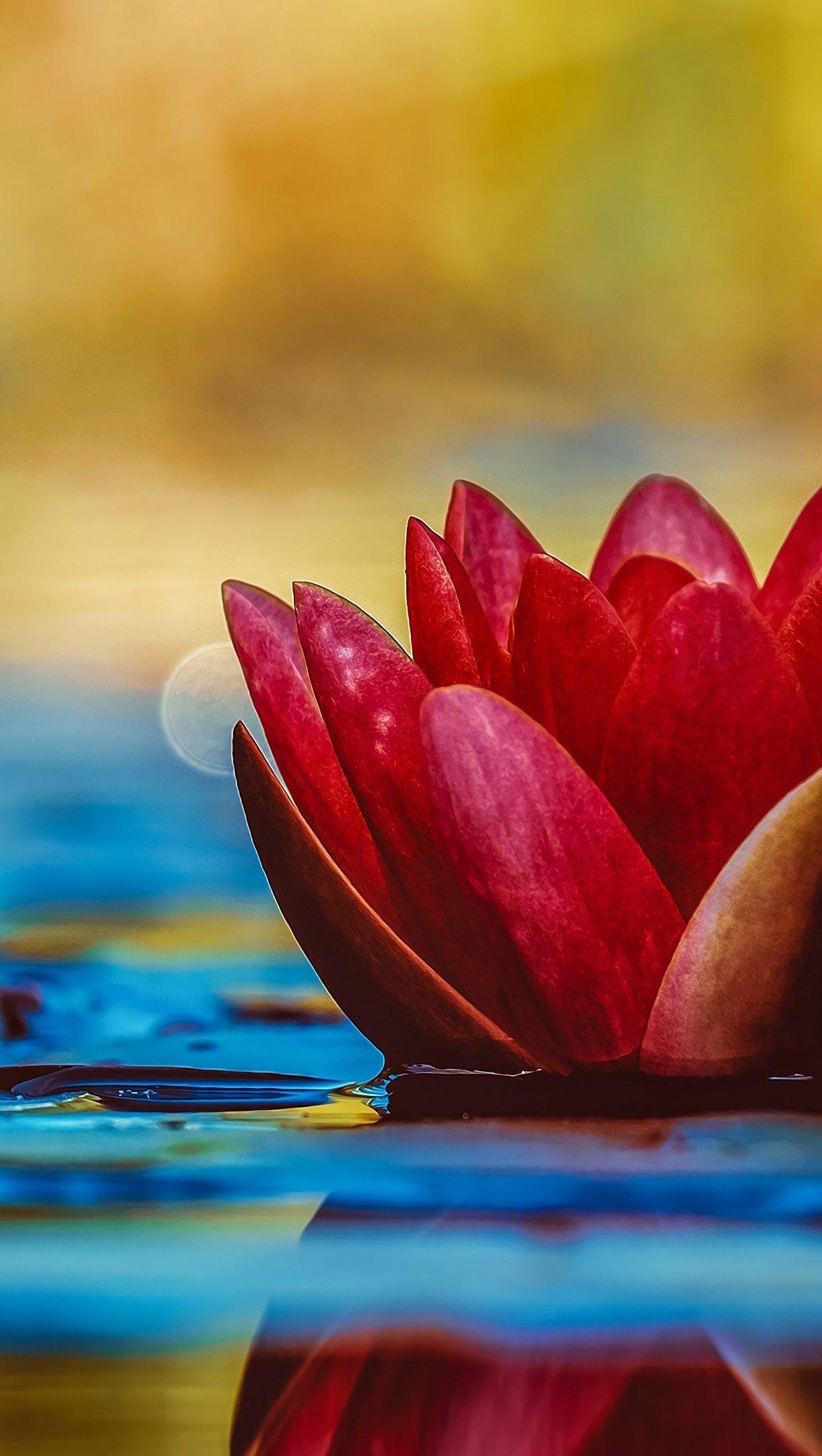 Wallpaper Lotus floating in water Vertical