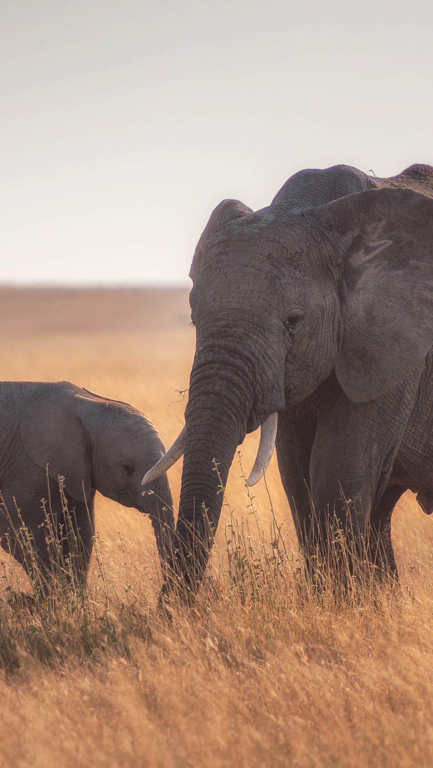 Fondos de pantalla Madre y bebe elefante Vertical