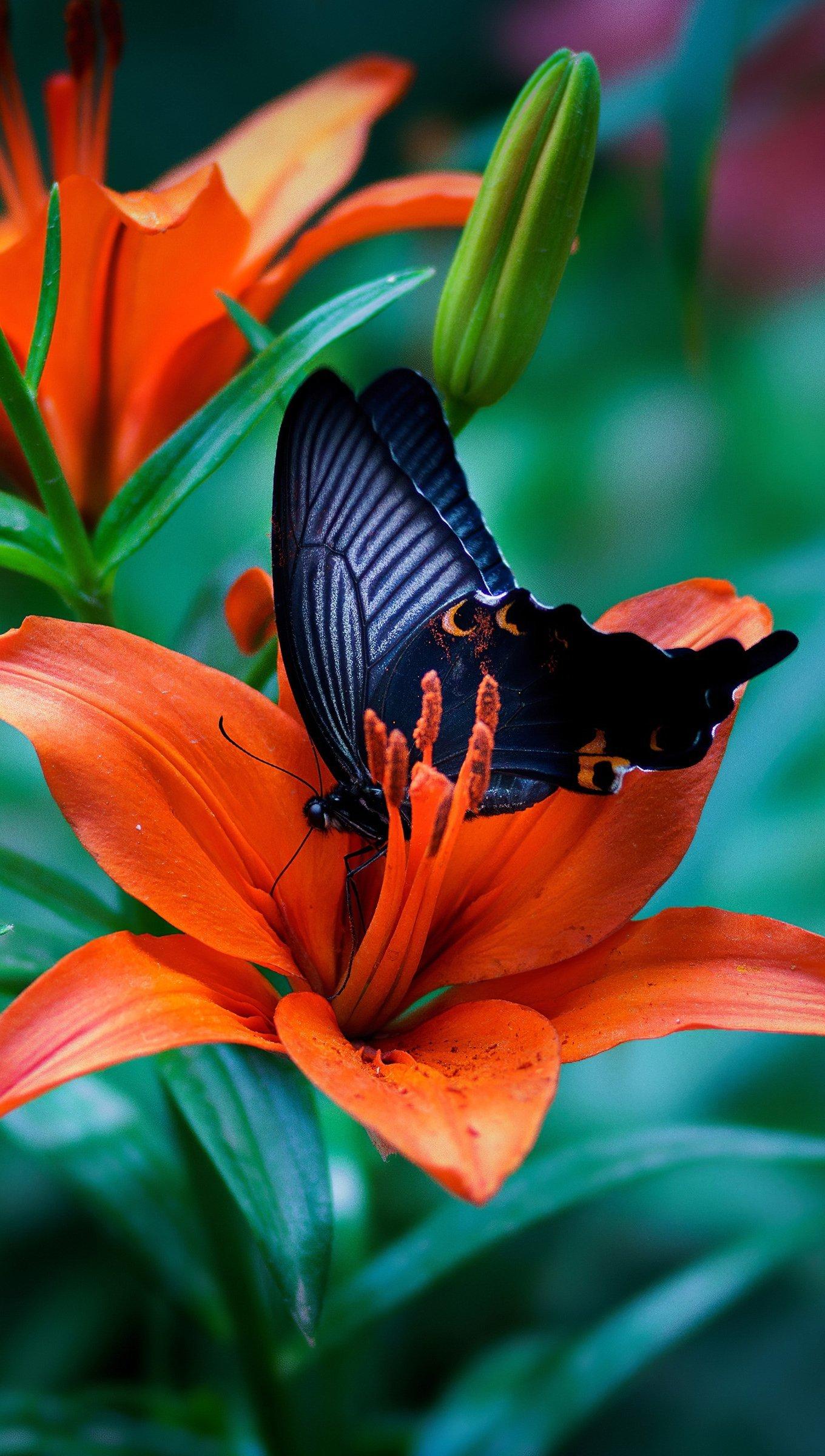 Wallpaper Butterfly in flower Vertical