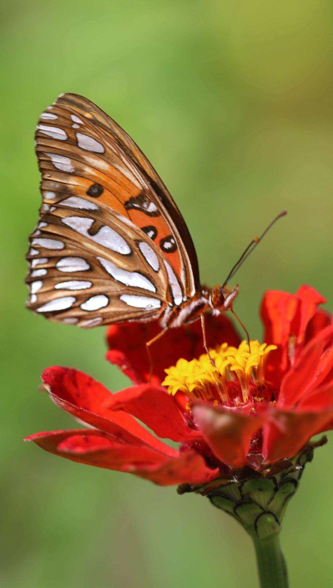 Fondos de pantalla Mariposa en flor roja Vertical