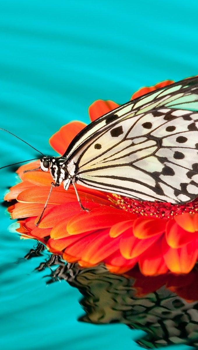 Fondos de pantalla Mariposa en flor sobre el agua Vertical