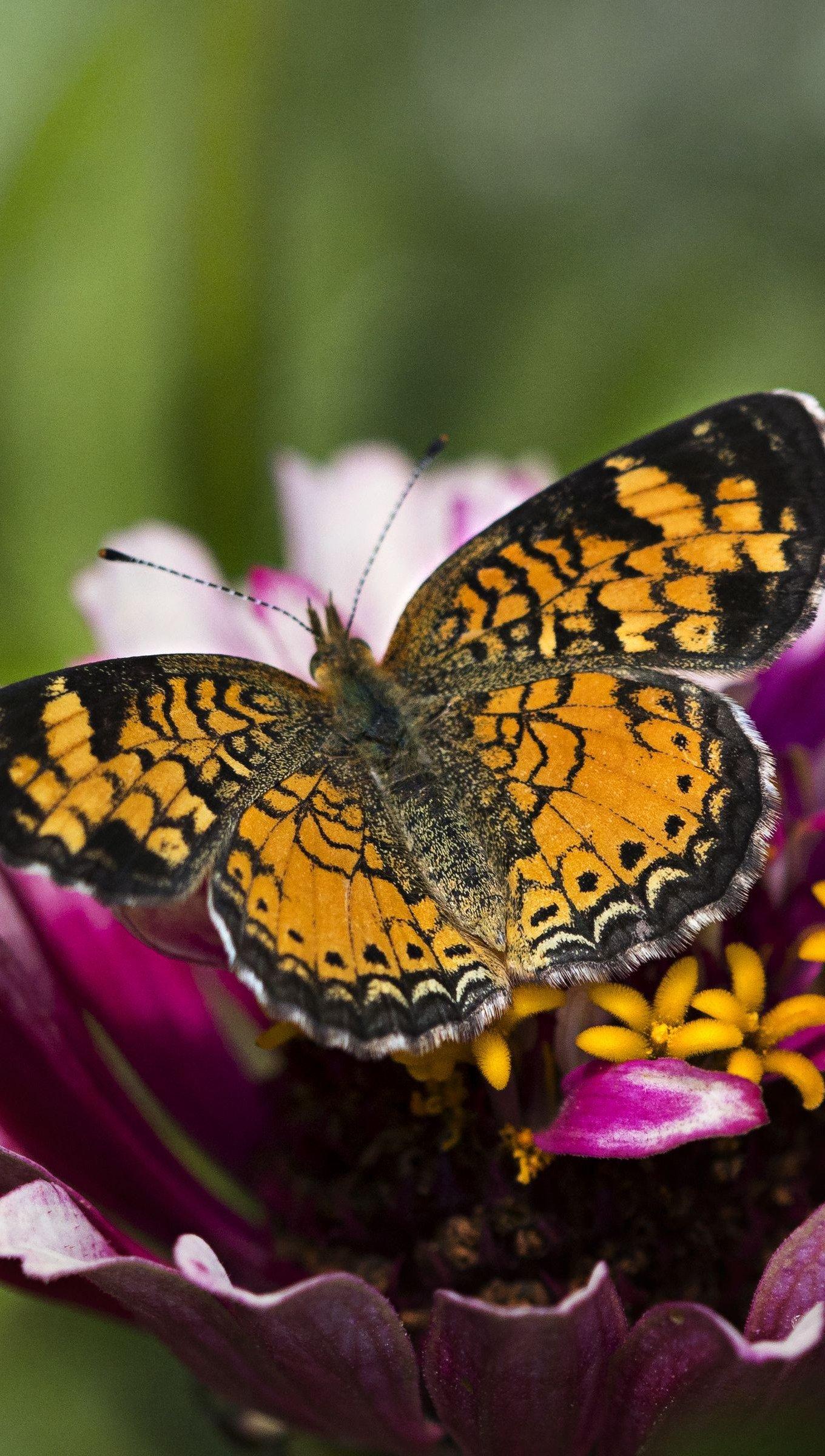 Wallpaper Butterfly over flower Vertical