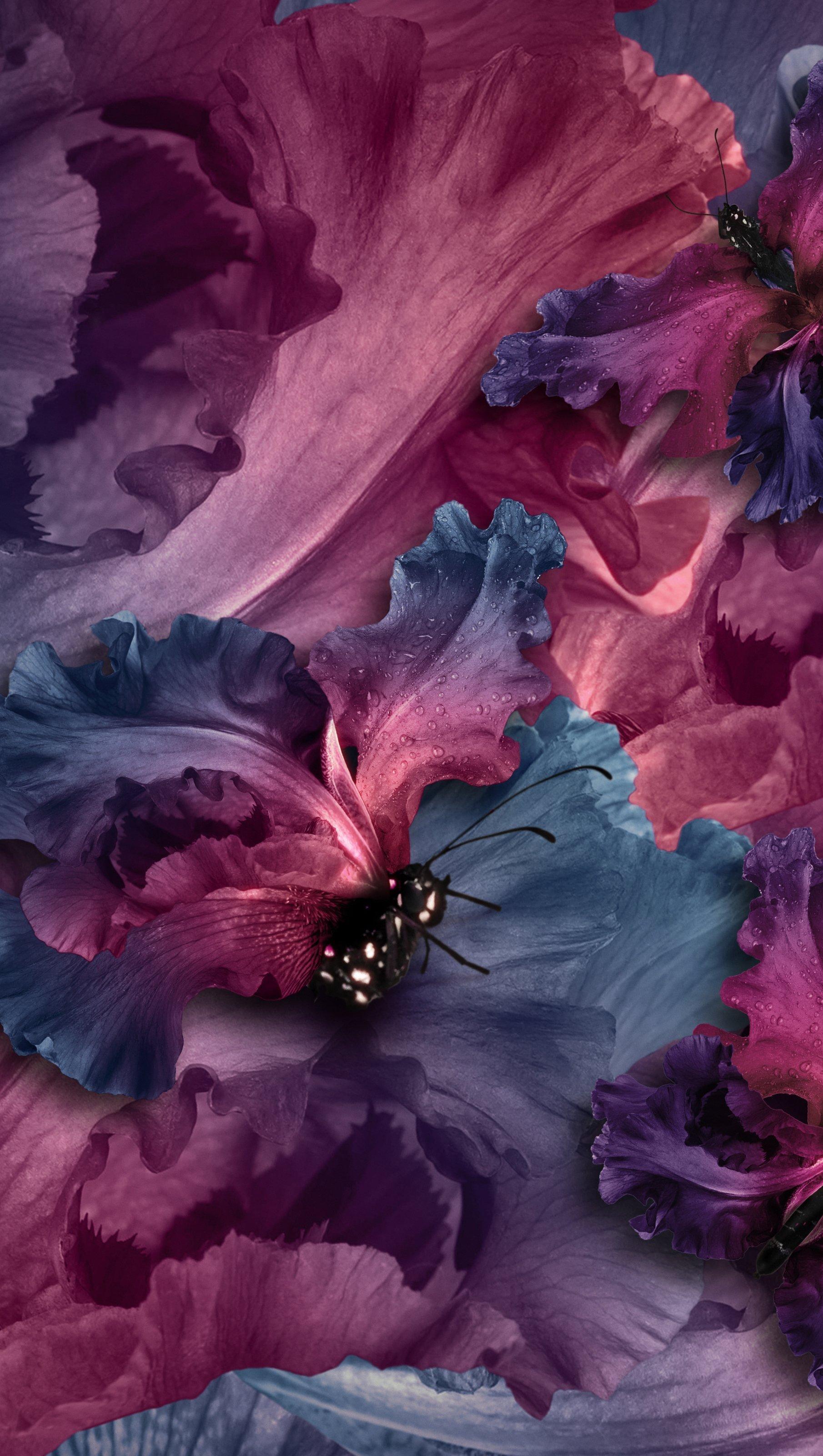Wallpaper Irises butterflies Vertical