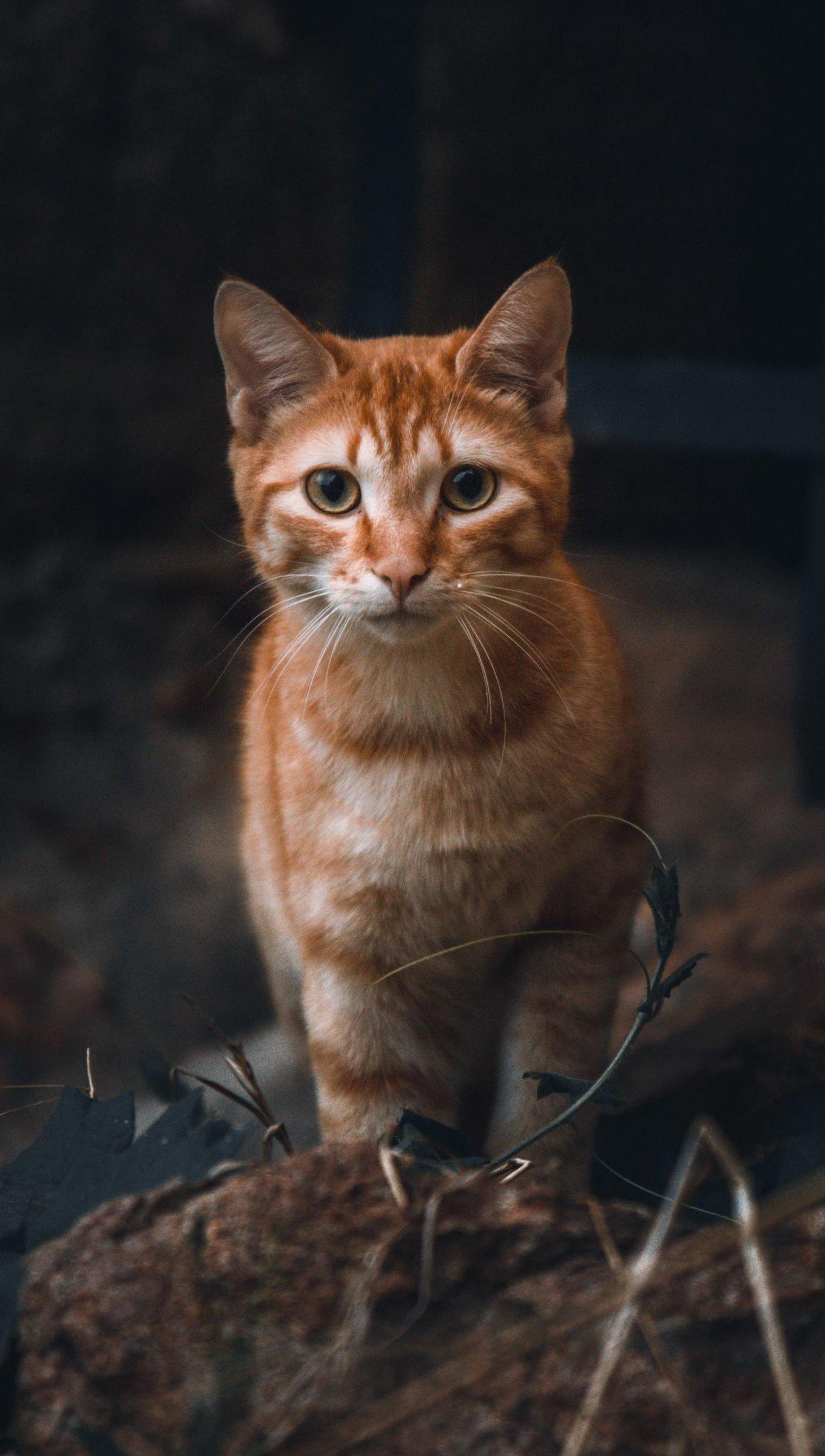 Fondos de pantalla Mirada de gato Vertical
