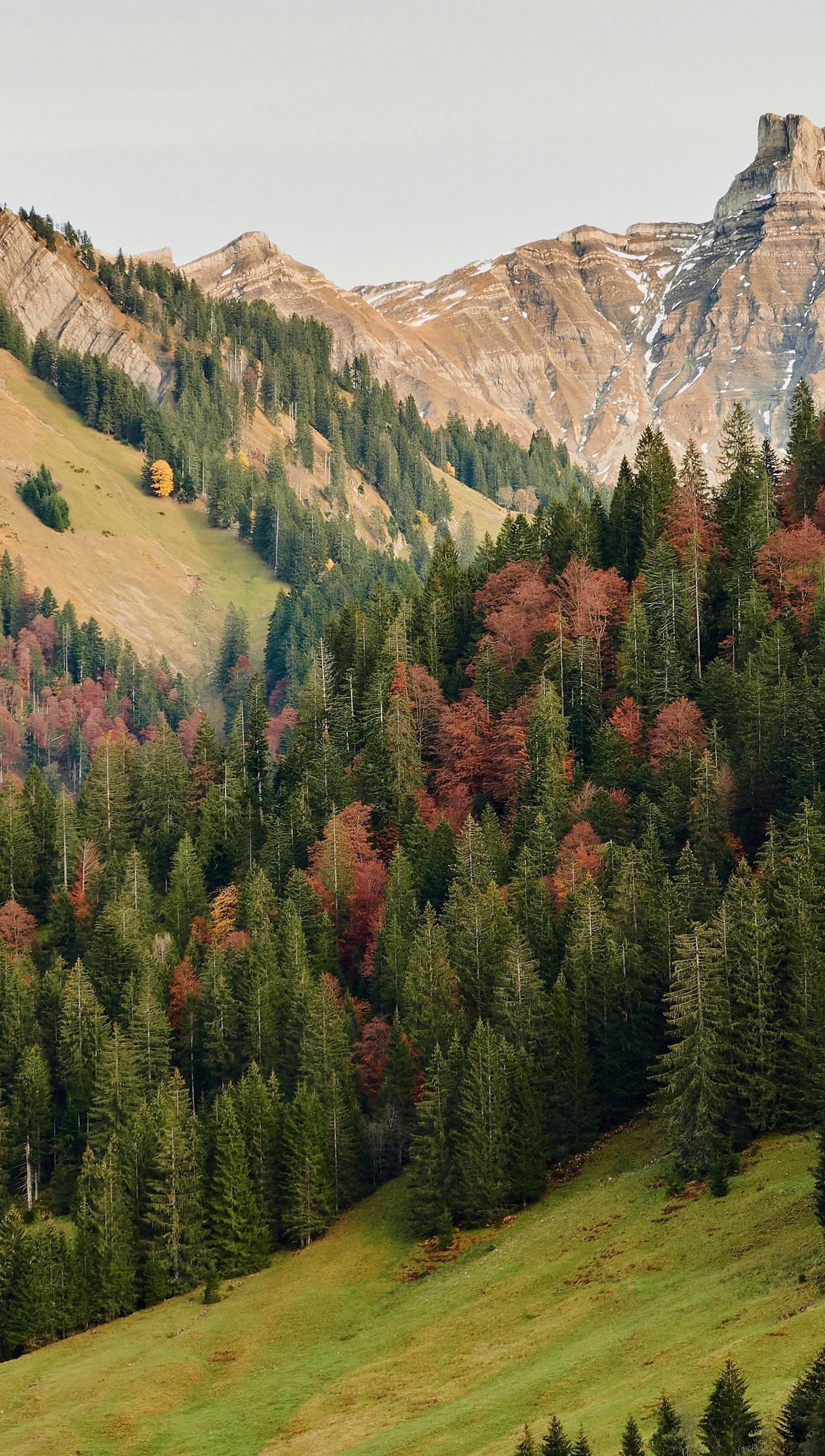 Fondos de pantalla Montañas en bosque durante el otoño Vertical