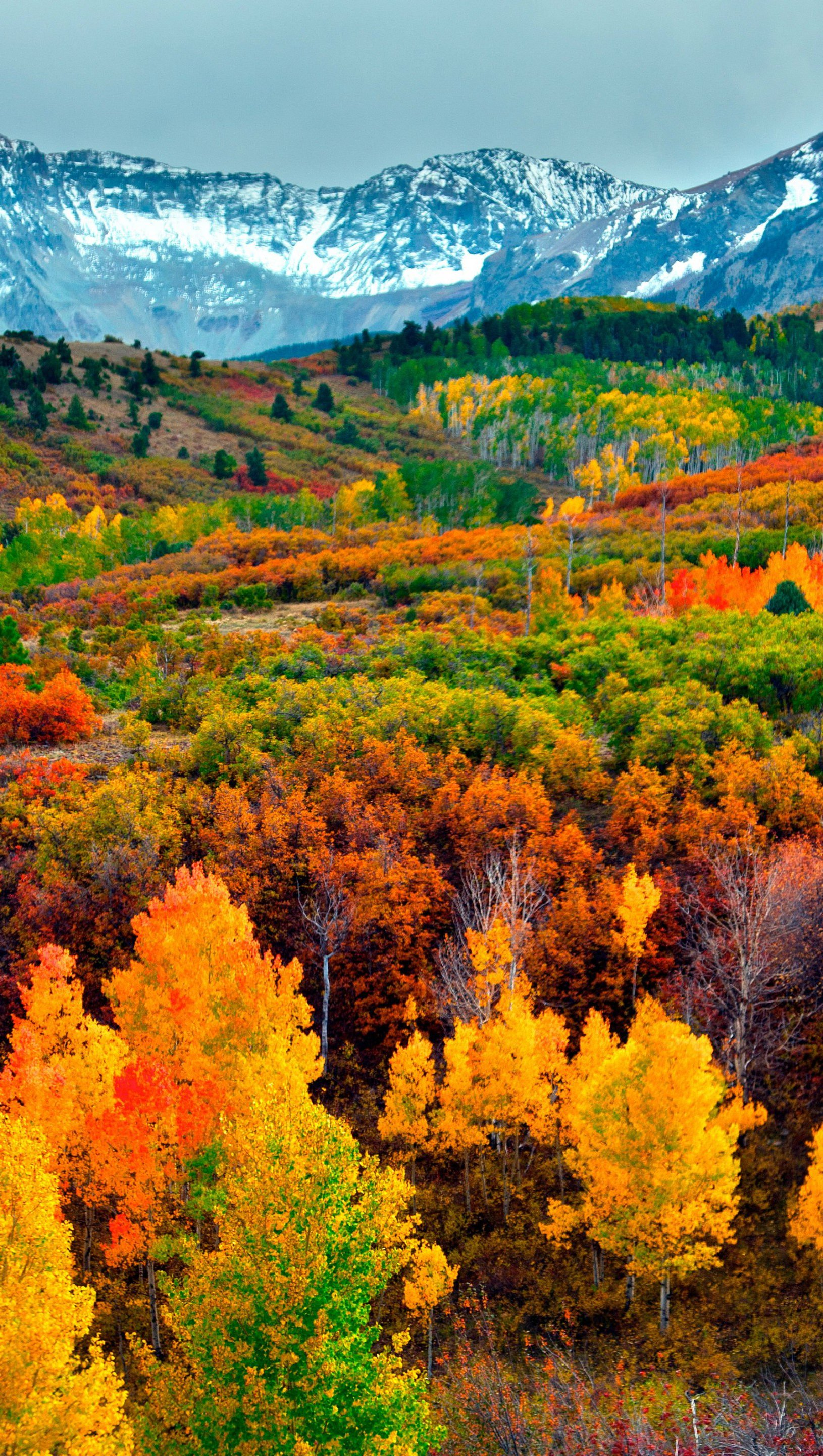 Wallpaper Mountains and forest in autumn Vertical