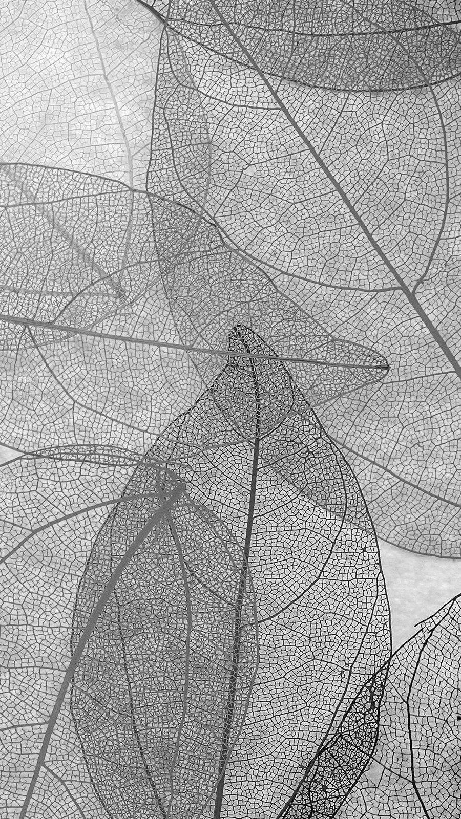 Fondos de pantalla Naturaleza Hojas blanco y negro Vertical