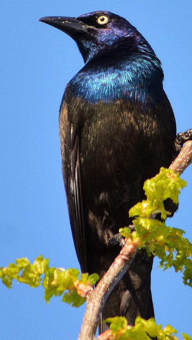 Wallpaper Sunbird on branch Vertical