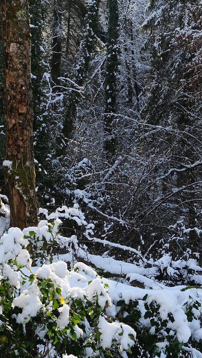 Fondos de pantalla Nieve en el bosque Vertical