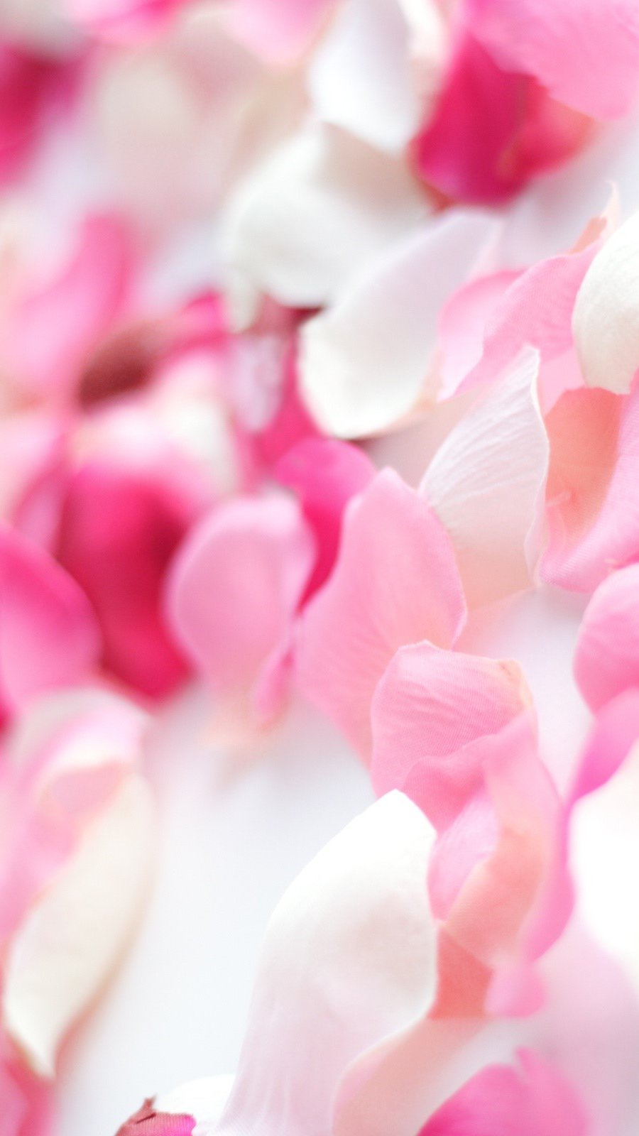 Fondos de pantalla Orquídea rosa Vertical