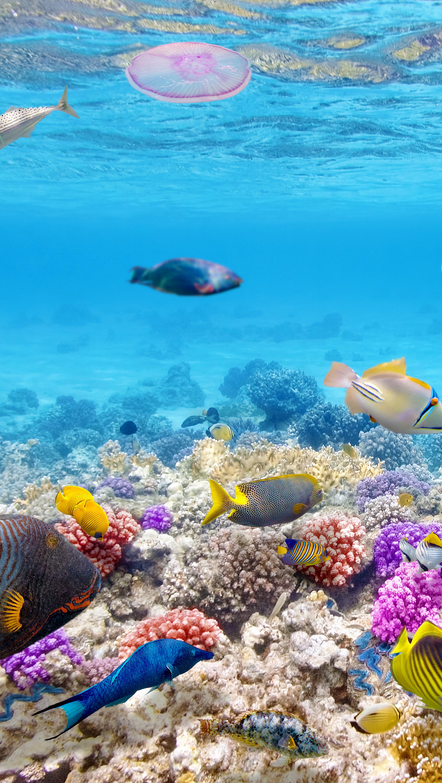 Fondos de pantalla Peces en el océano Vertical
