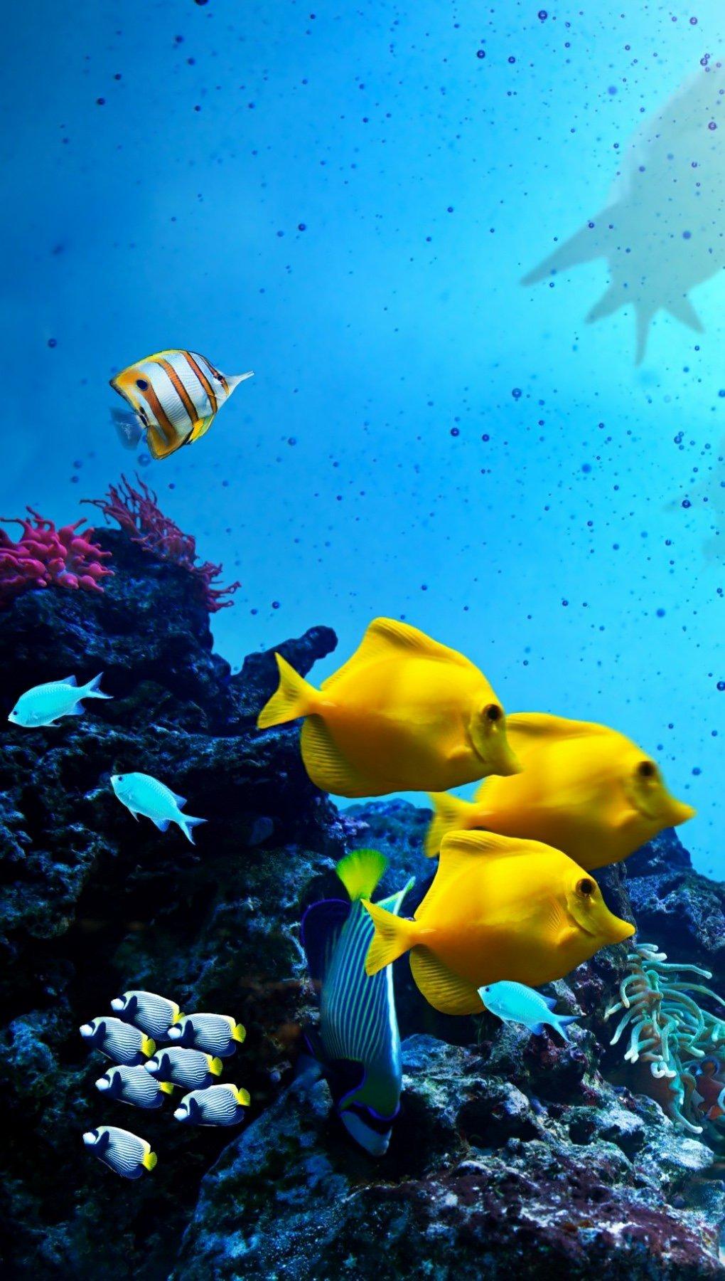 Fondos de pantalla Peces y tiburones en el océano Vertical