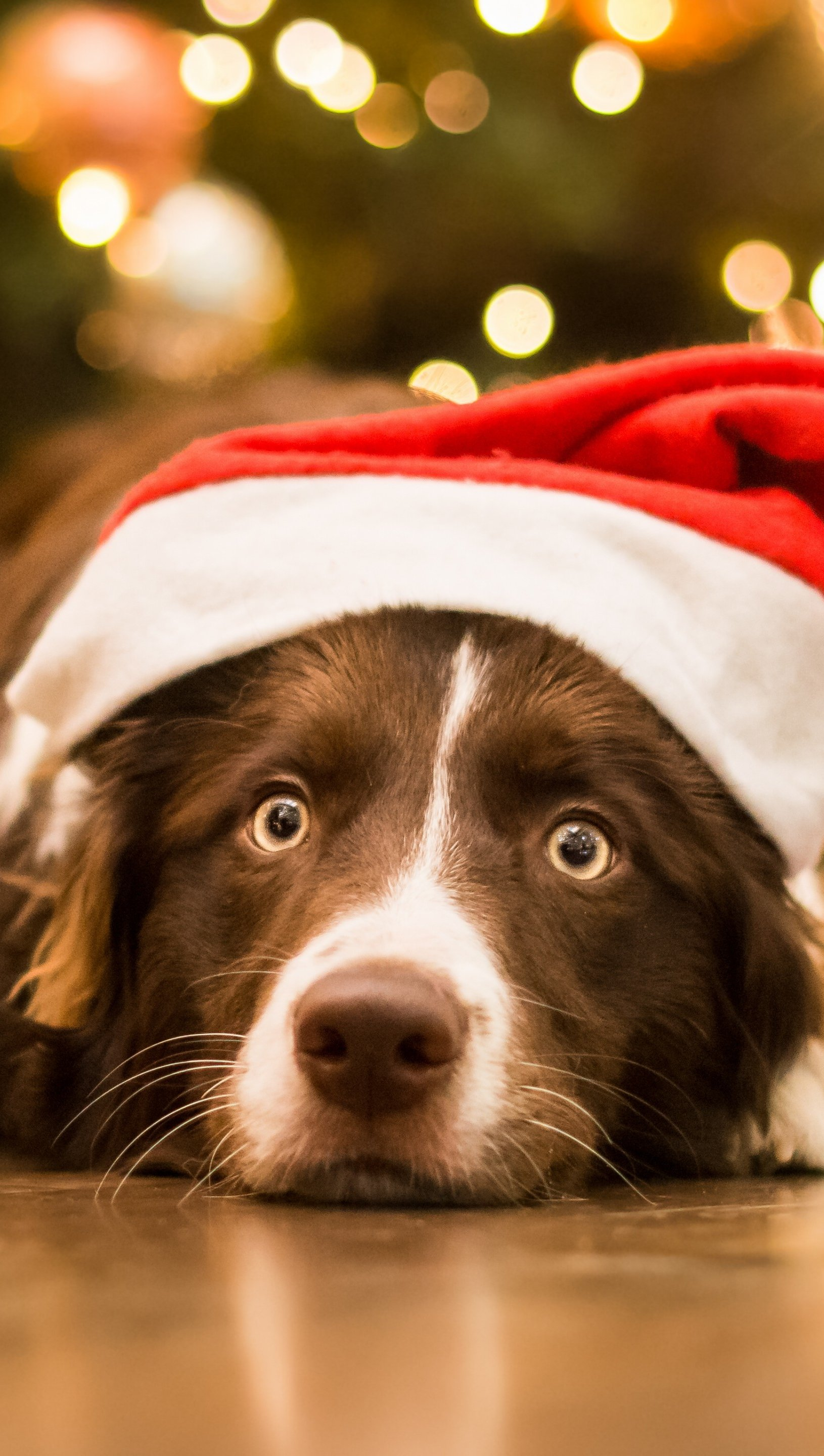 Wallpaper Dog with Santa Claus hat Vertical