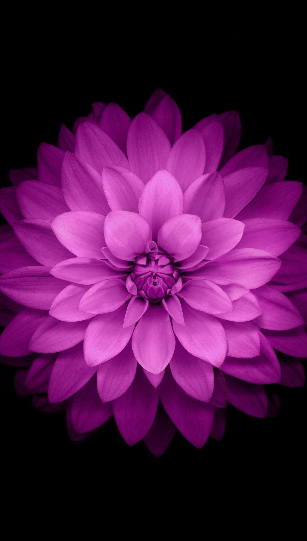 Fondos de pantalla Pétalos de flor Vertical