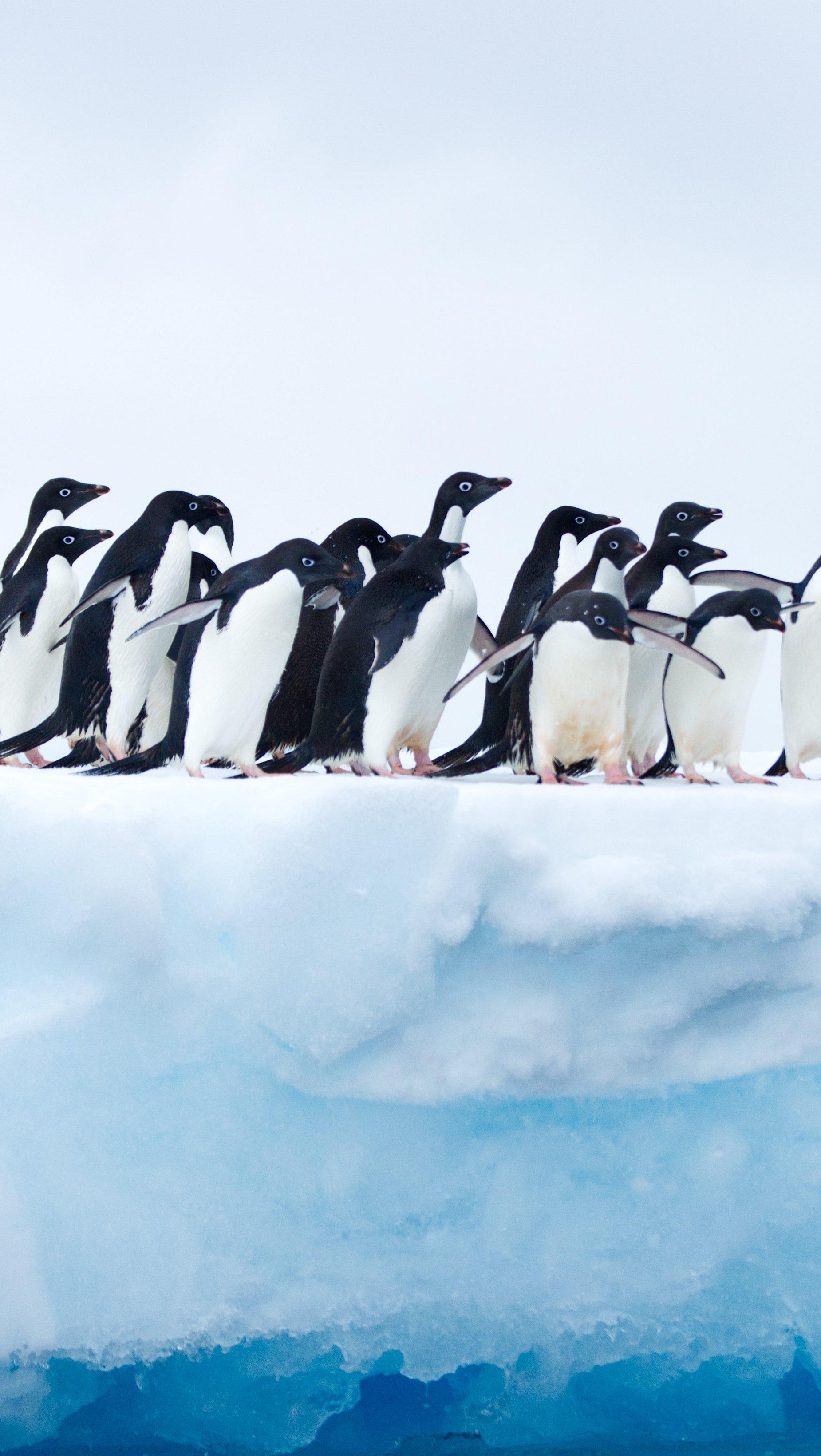 Fondos de pantalla Pingüinos en la Antartica Vertical