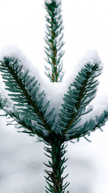 Fondos de pantalla Pino con nieve Vertical