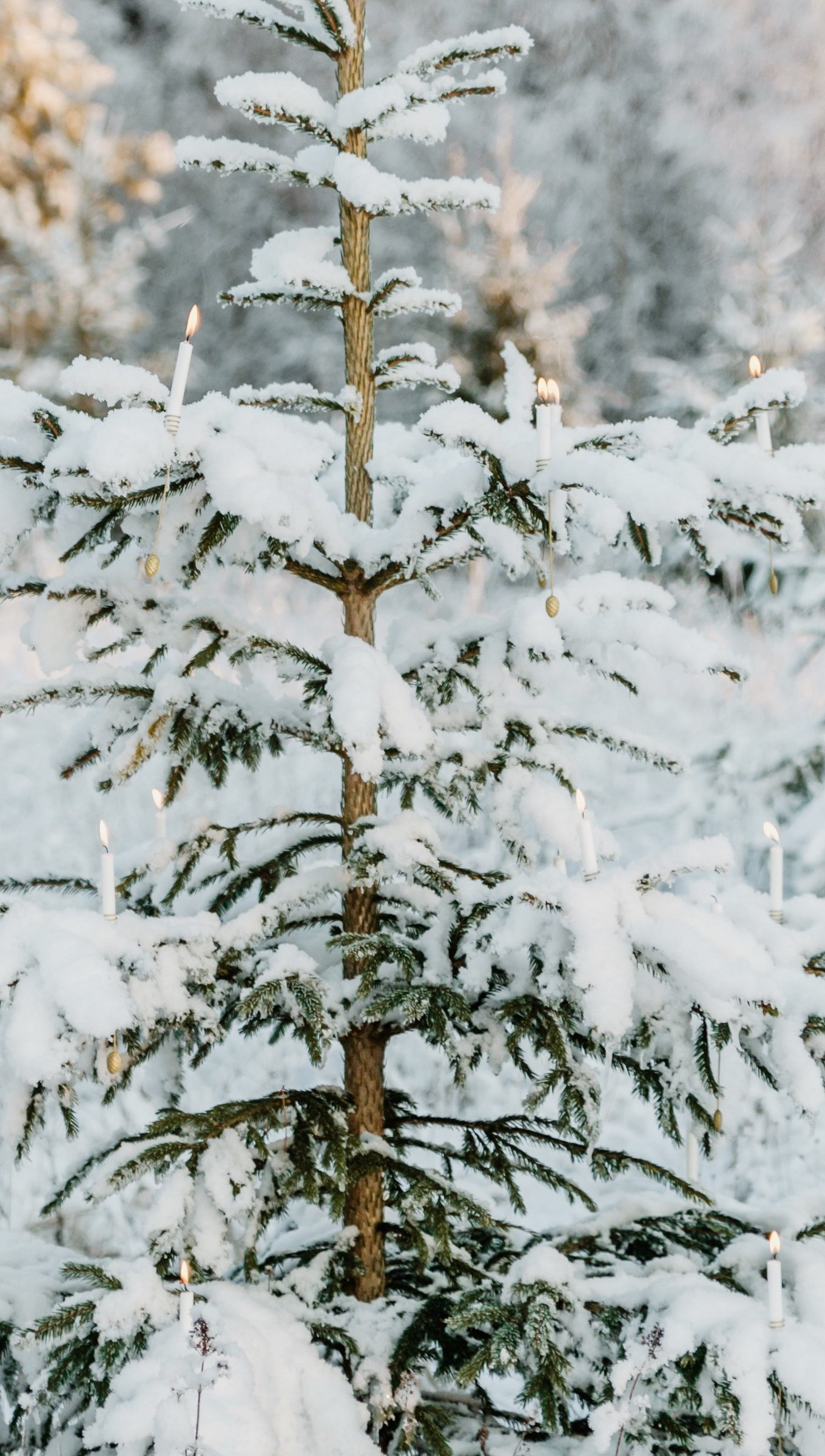 Fondos de pantalla Pinos con nieve Vertical