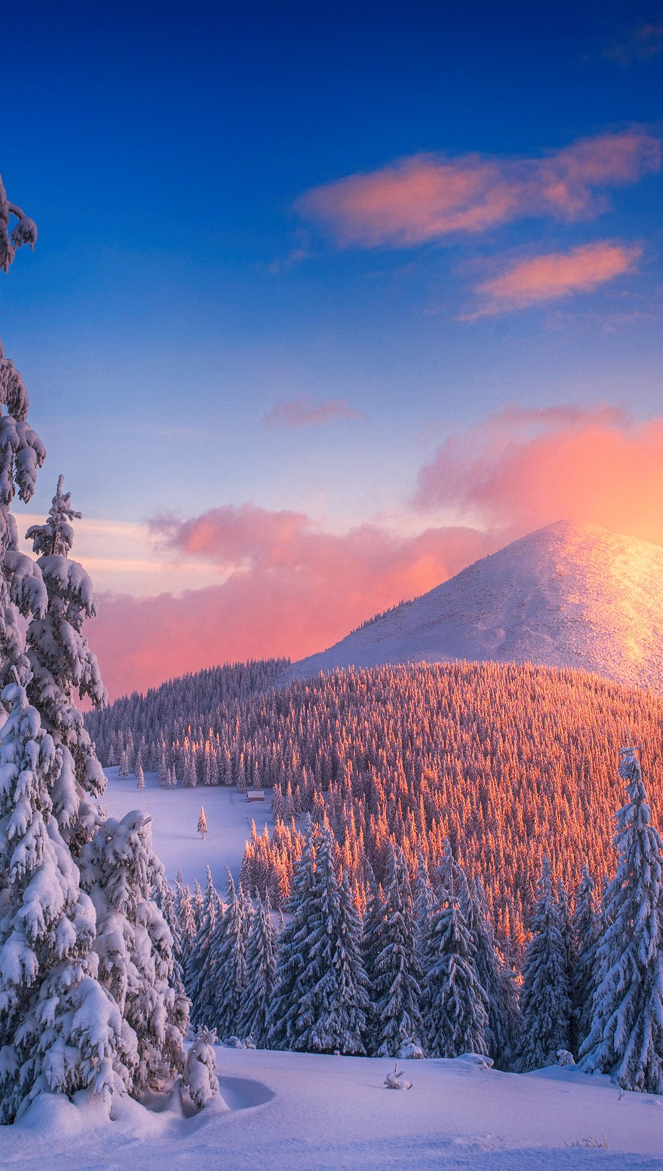 Wallpaper Snowy pine trees at sunset in mountains Vertical